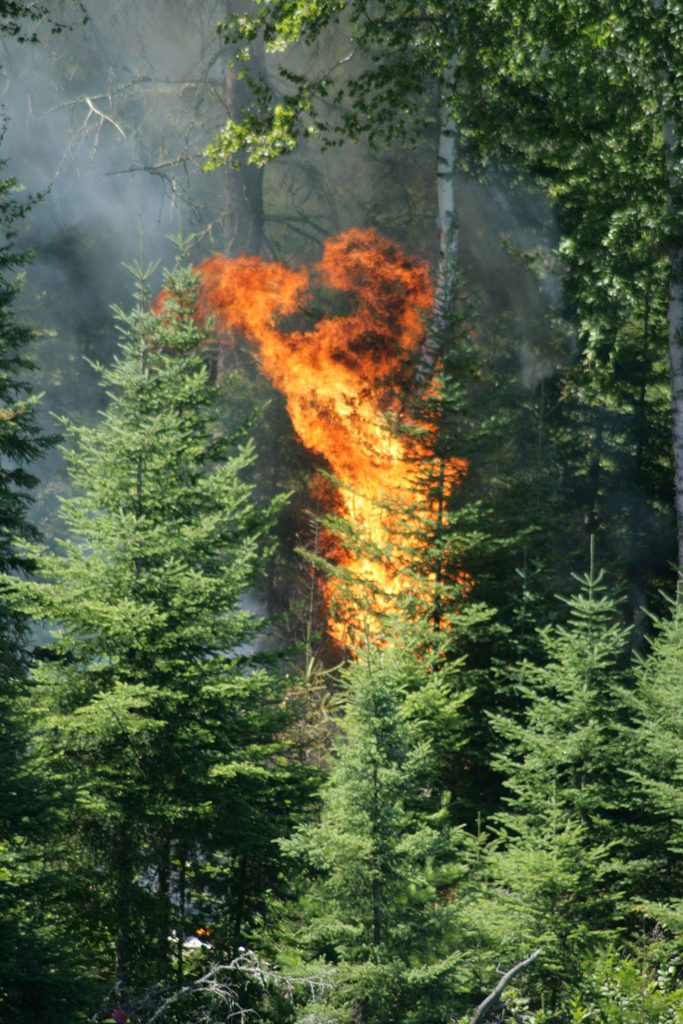 Mica-Bay-Burn-2-683x1024.jpg