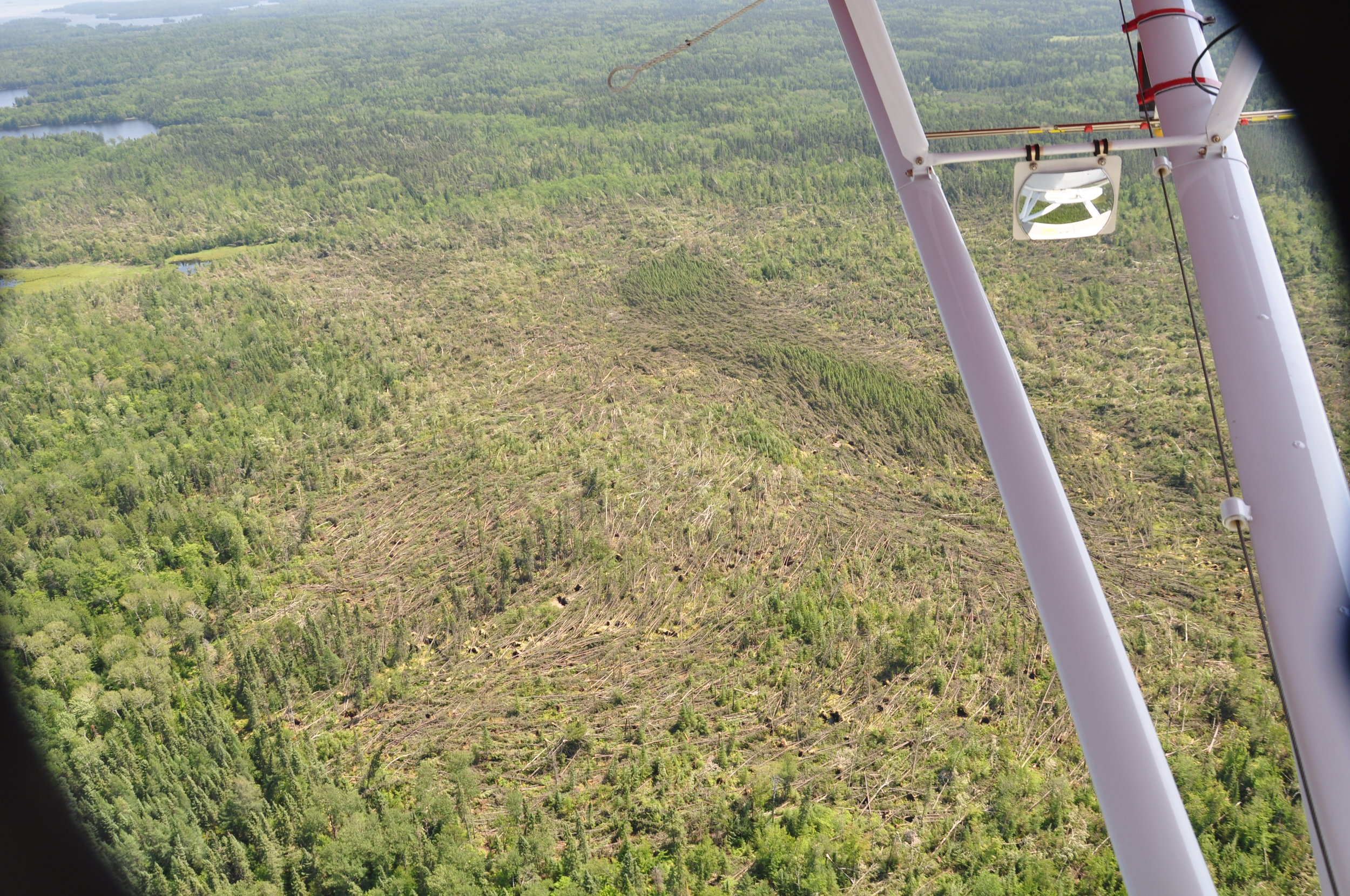 Close-up shot of tornado damage, showing circular pattern of downed trees that is typical in tornado events