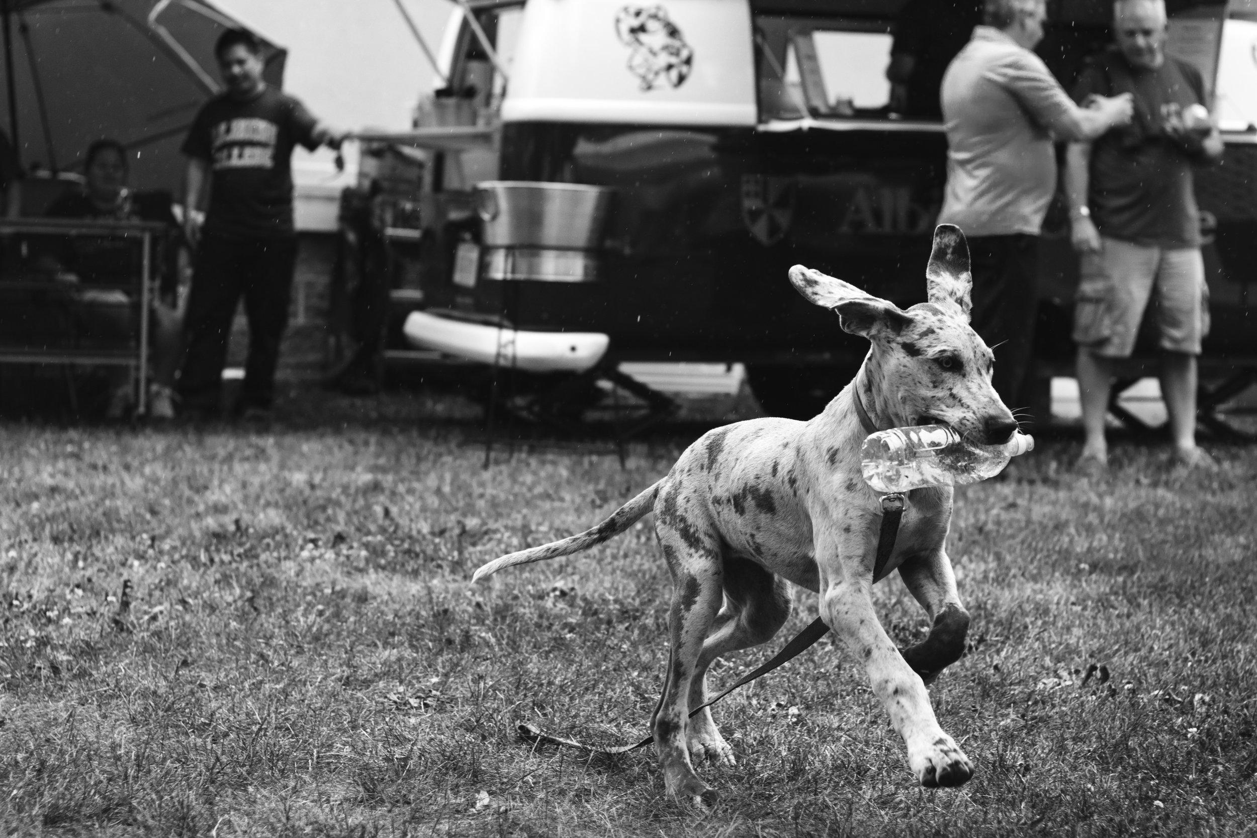 16-06-04__Portfolio_Animals_9880.JPG