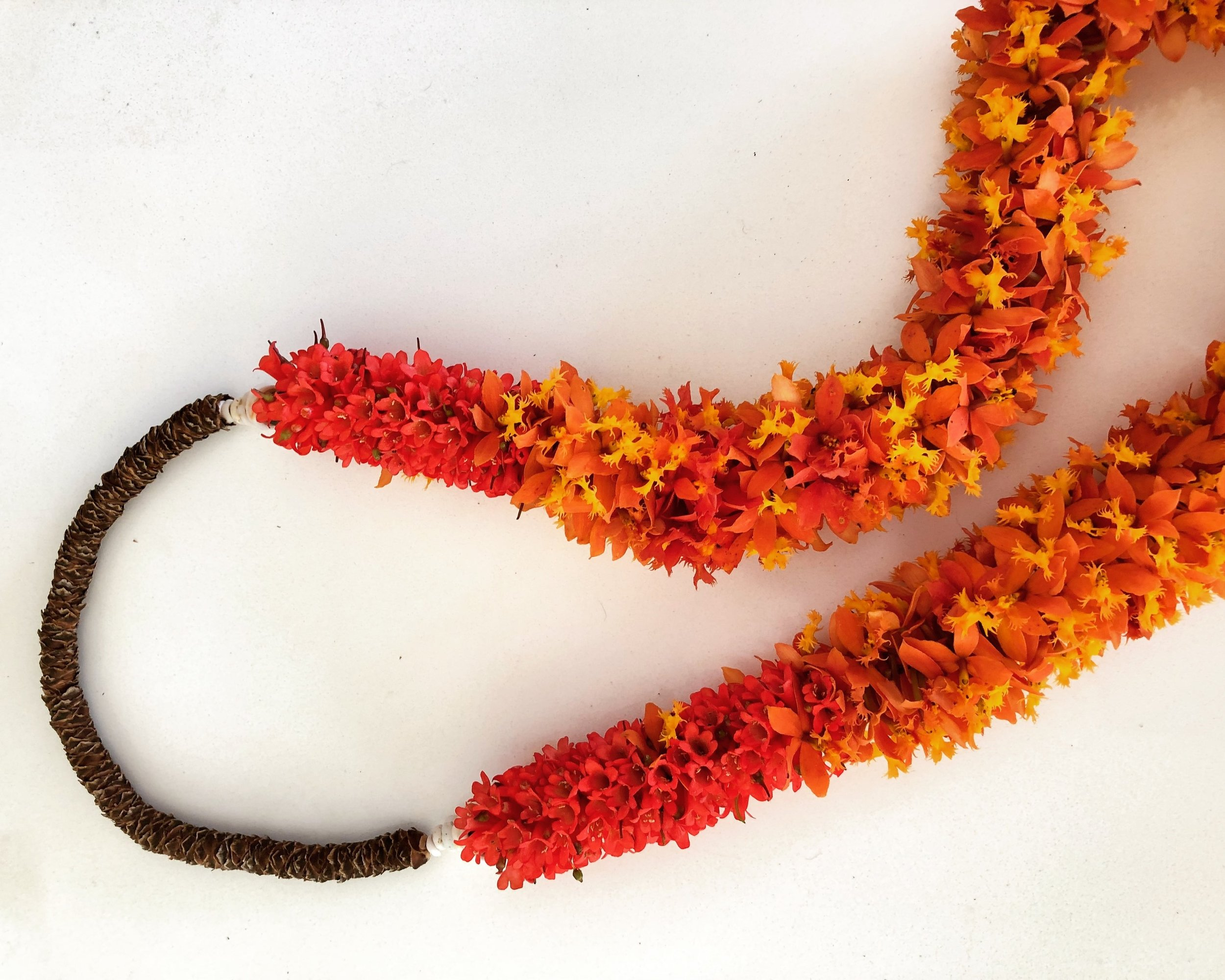 Upcountry Maui is scattered with wild Orange Epidendrum Orchids, blooming most of the year, they offer a wonderful color and girth to these lei. In combination with the Firecracker plant, another Maui staple, and a calyx neckpiece from the florescent of the Queen Palm.
