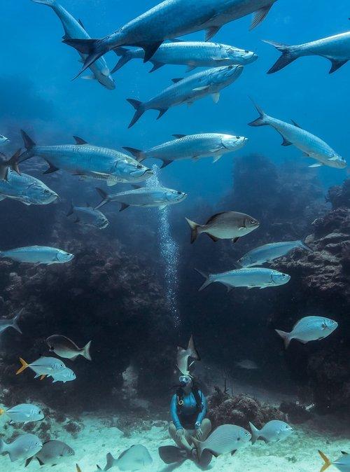 Yoga Diver