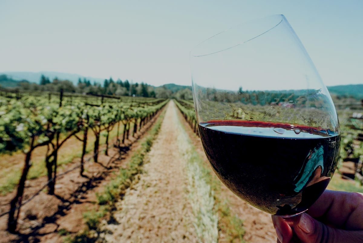 Grapeline Wine Tours - Increase of 4,000 followers in 5 months.