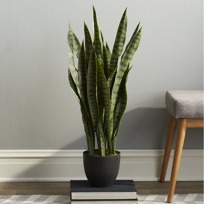 sipdinedesign artificial plants allergy 6.jpg