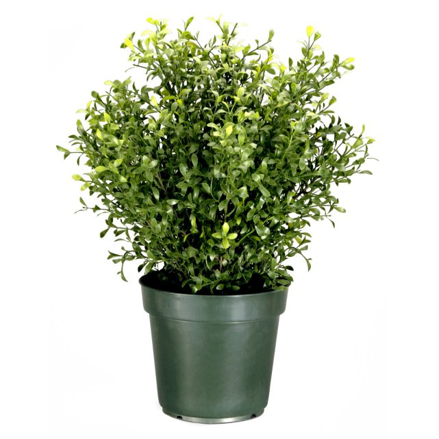 sipdinedesign artificial plants9.jpg