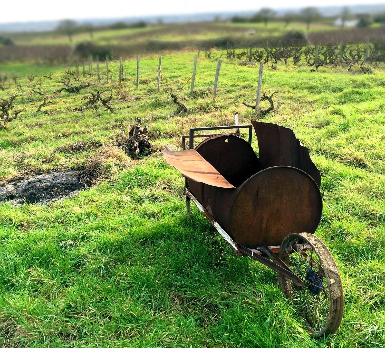 vineyard3_cc_crop.jpg