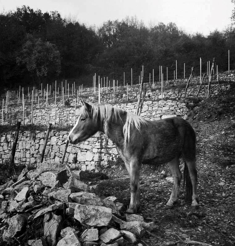 foto_cà_del_vént_cavallo_761x796.jpg