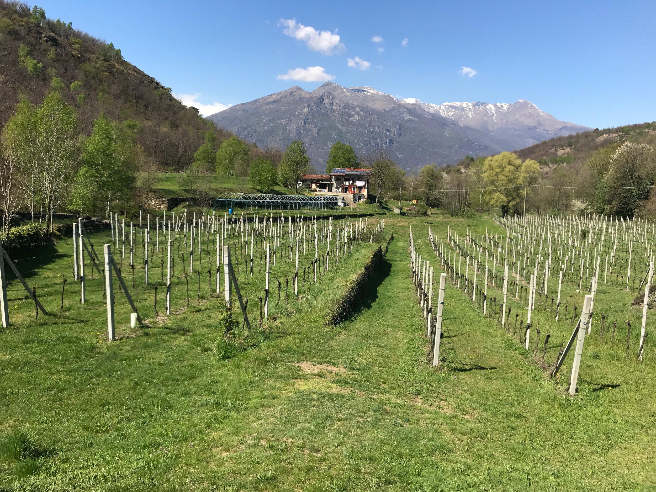 Terre Sparse vineyards.jpg