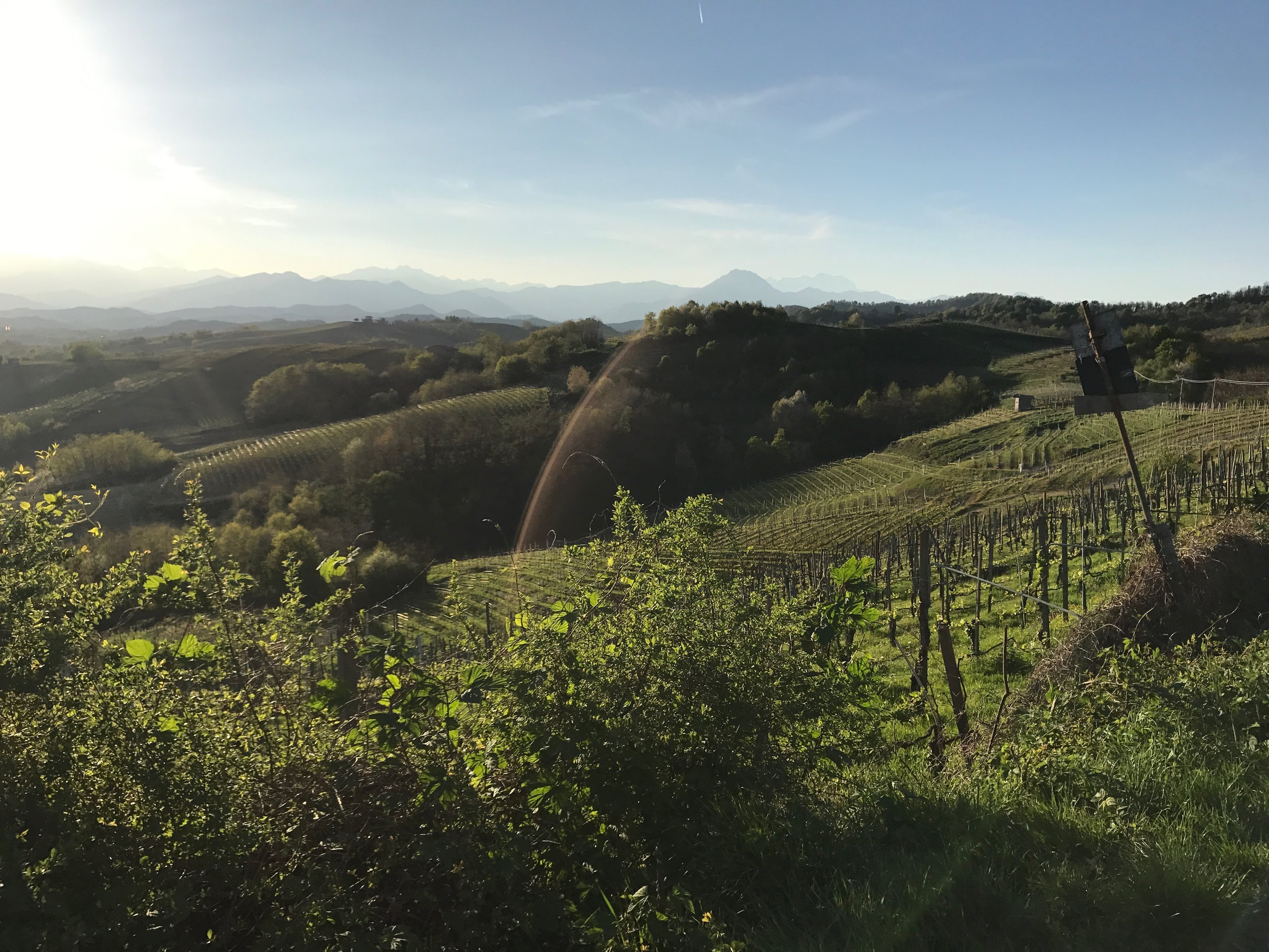 Gattinara vineyards.jpg