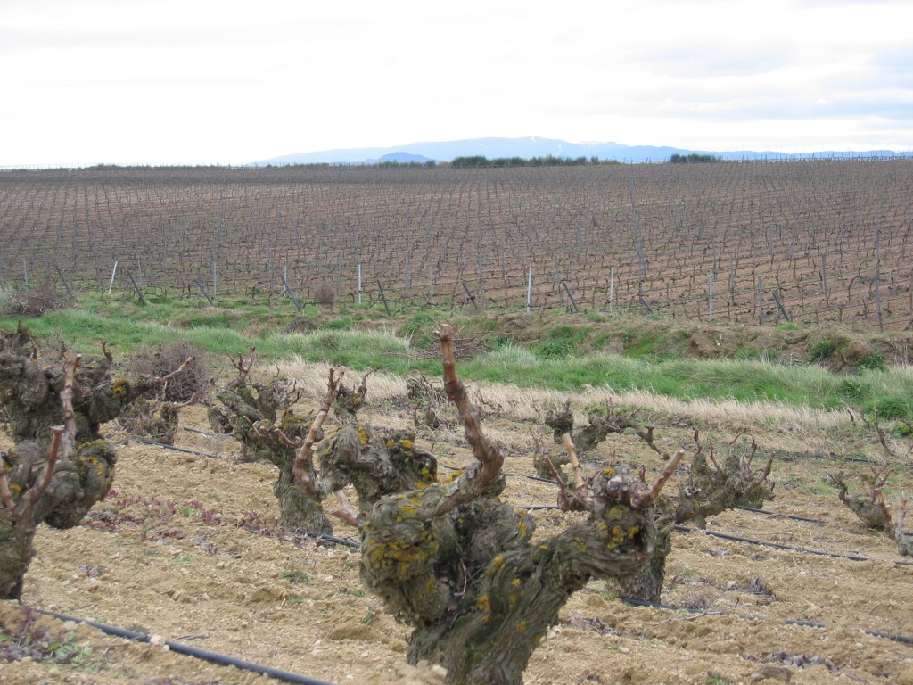 Nav-Vineyard5-1024x768.jpg