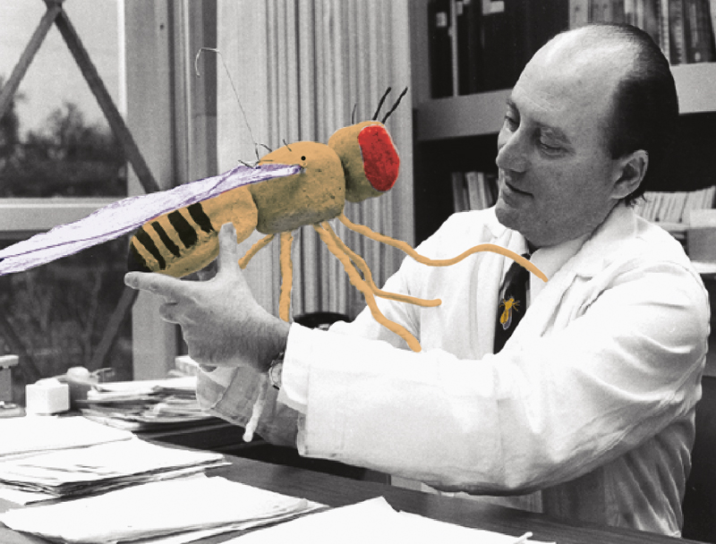 Biologist Seymour Benzer, who joined the Caltech faculty in the late '60s, in his office with an outsized (and colorized) Drosophila model.