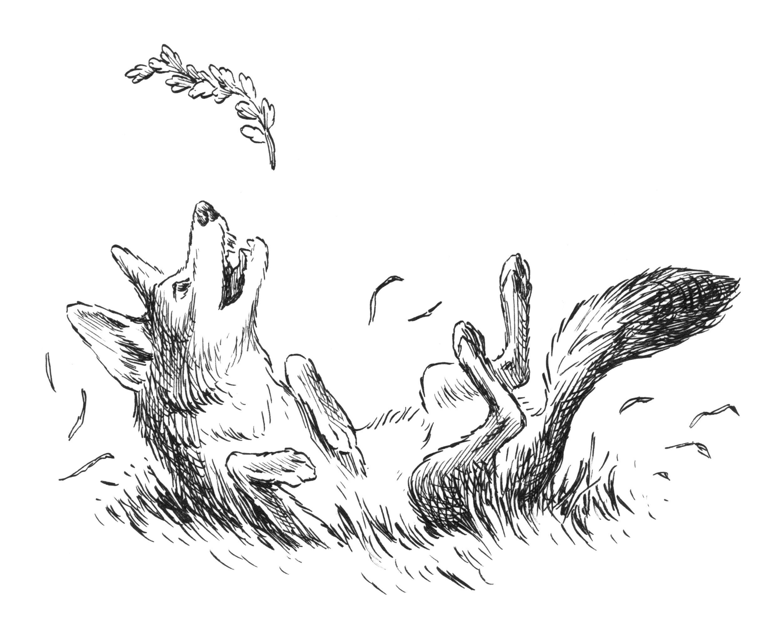 Coyote Spot 2.jpg