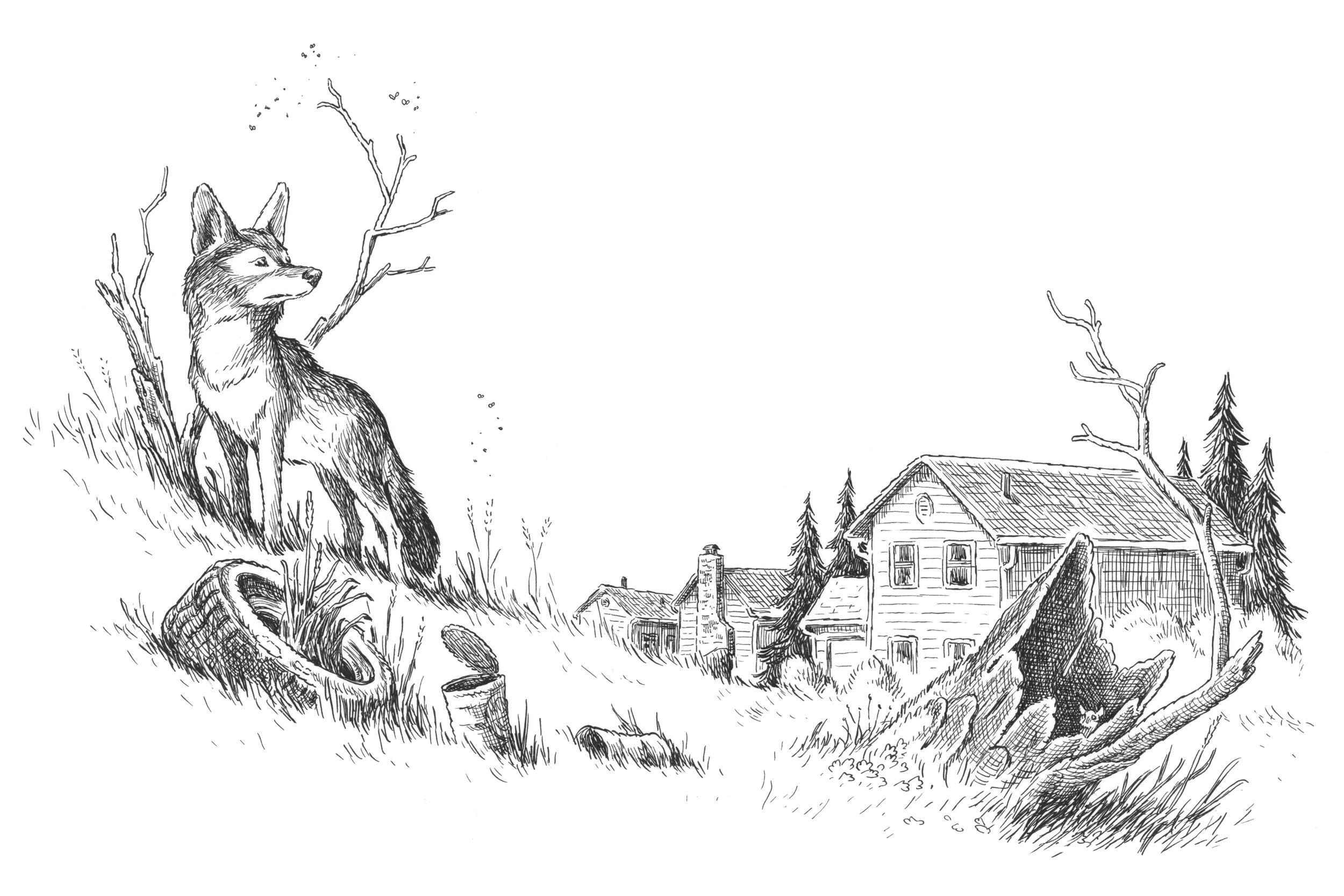 Coyote Vignette.jpg