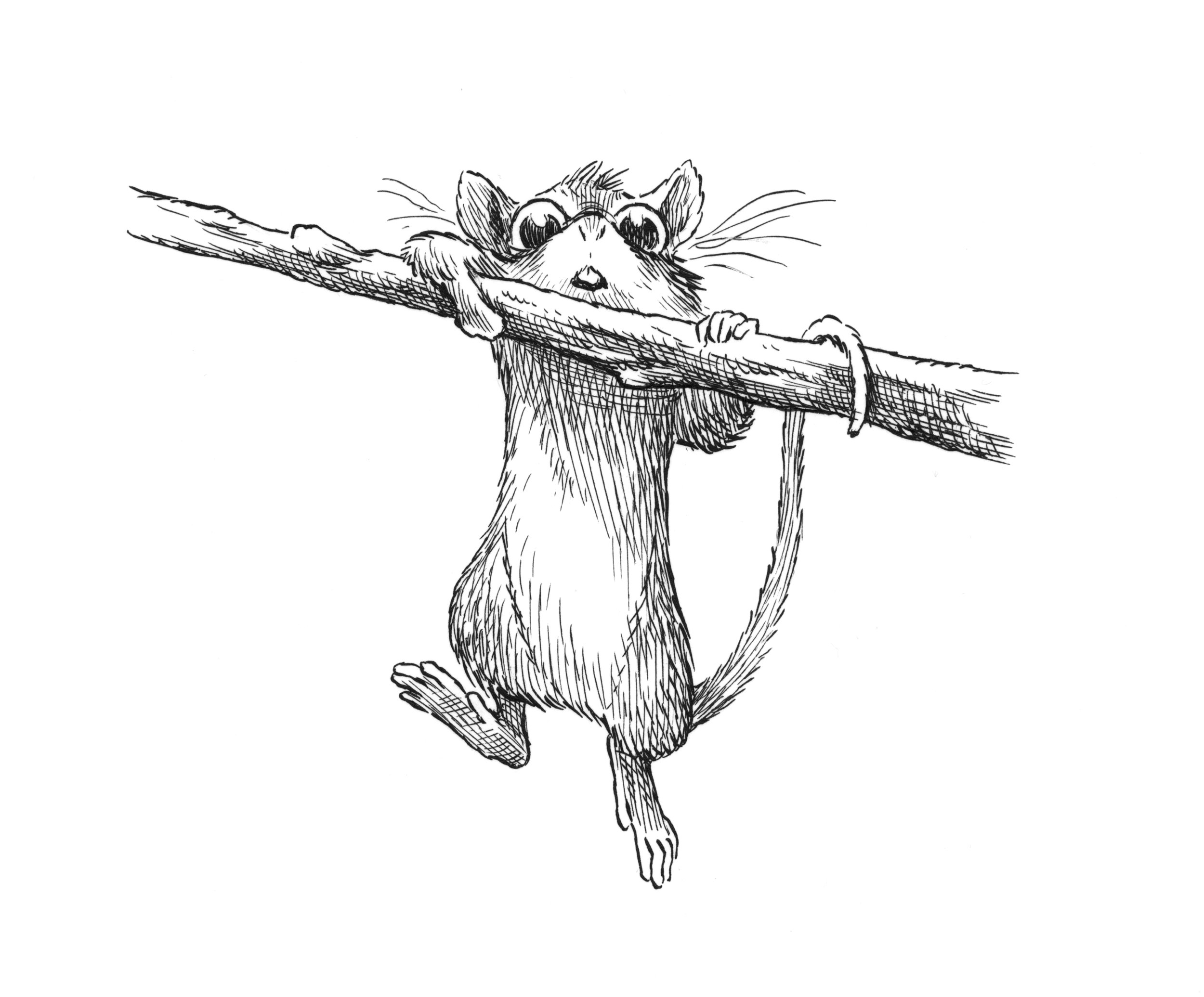 mouse hang on.jpg