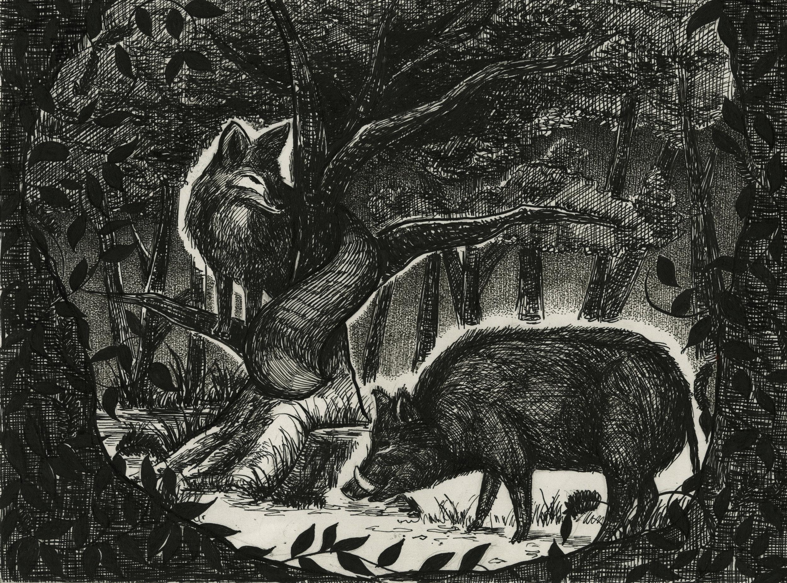 Wild Boar and Fox