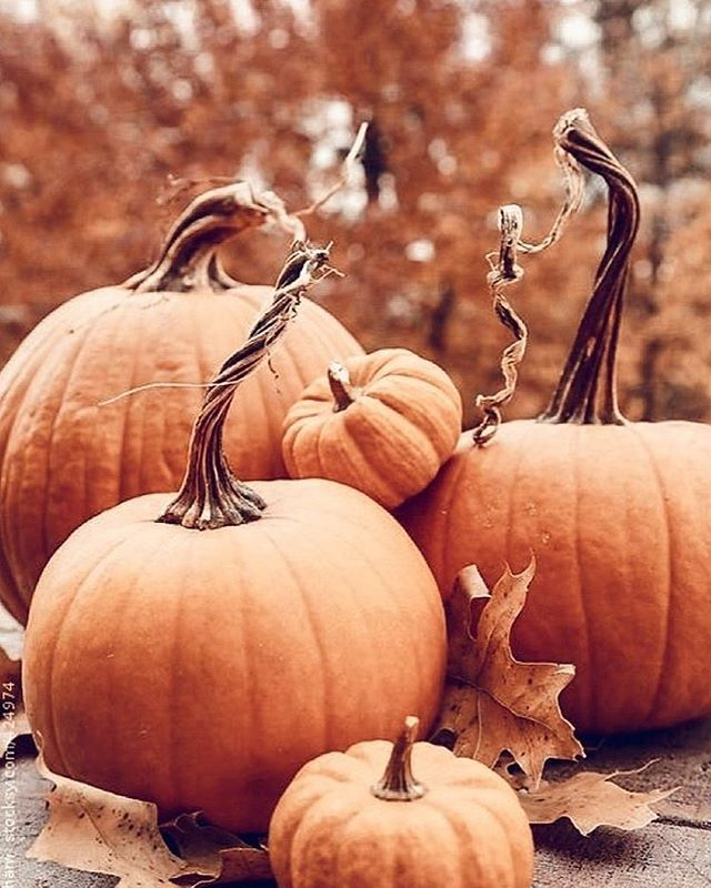 How many visits to the pumpkin patch is too many? Asking for a friend 🎃