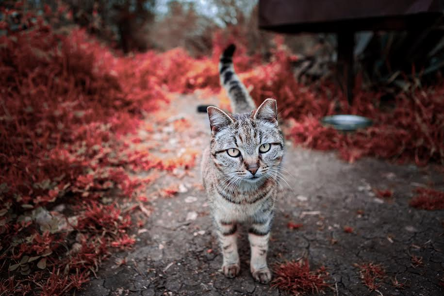 A stunning picture of a cat. (Picture by Samer Ghani)