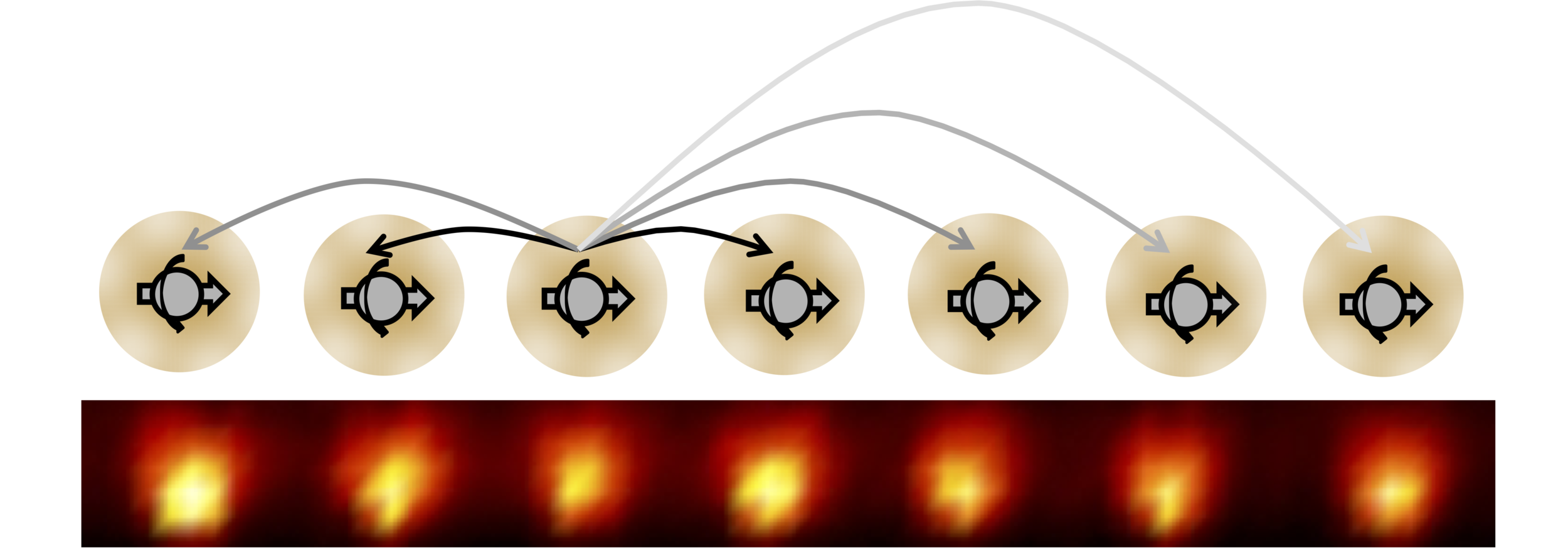 Discrete Time Crystal in Trapped Ions and NVs