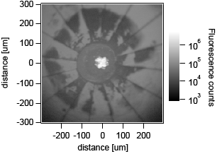 Scanning confocal image of diamond anvil.  The fluorescence in the center (white) is from ruby microspheres in the sample chamber to calibrate pressure. The remaining fluorescence in the image is from NV centers in the anvil.