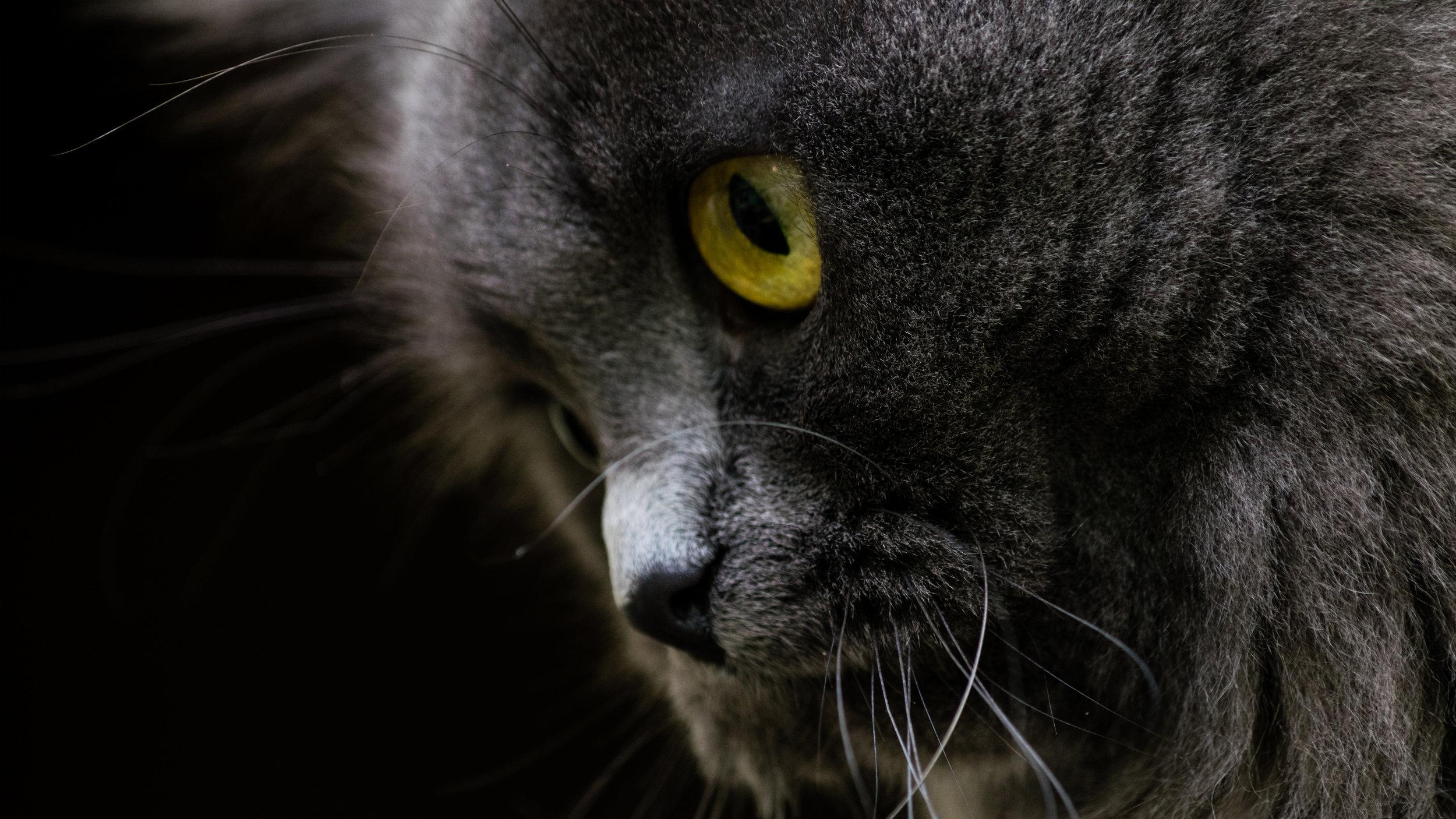 18291291785_c42833123e_o_cat1.jpg