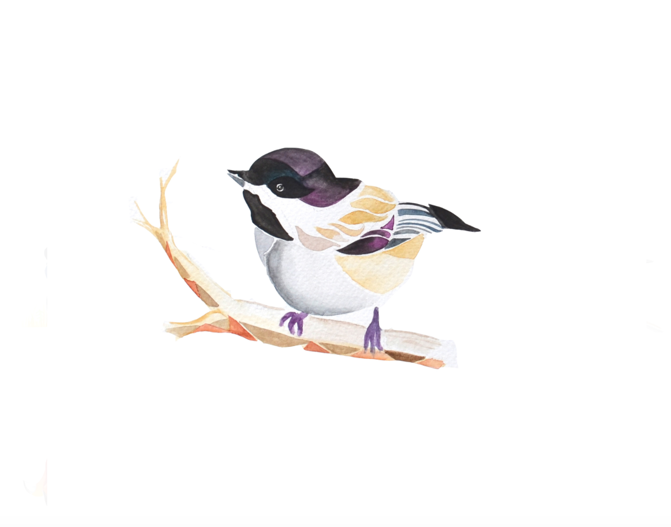 Chickadee  watercolour on Fabriano CP paper  nine inches x nine inches  2014