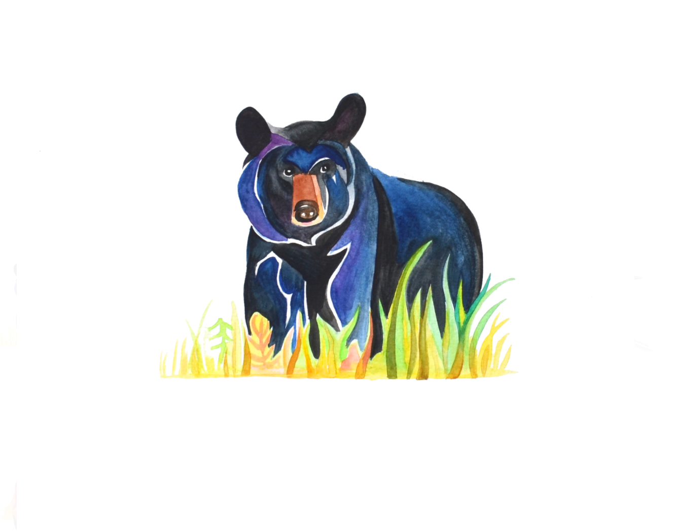 Black Bear  watercolour on Fabriano CP paper  nine inches x nine inches  2014