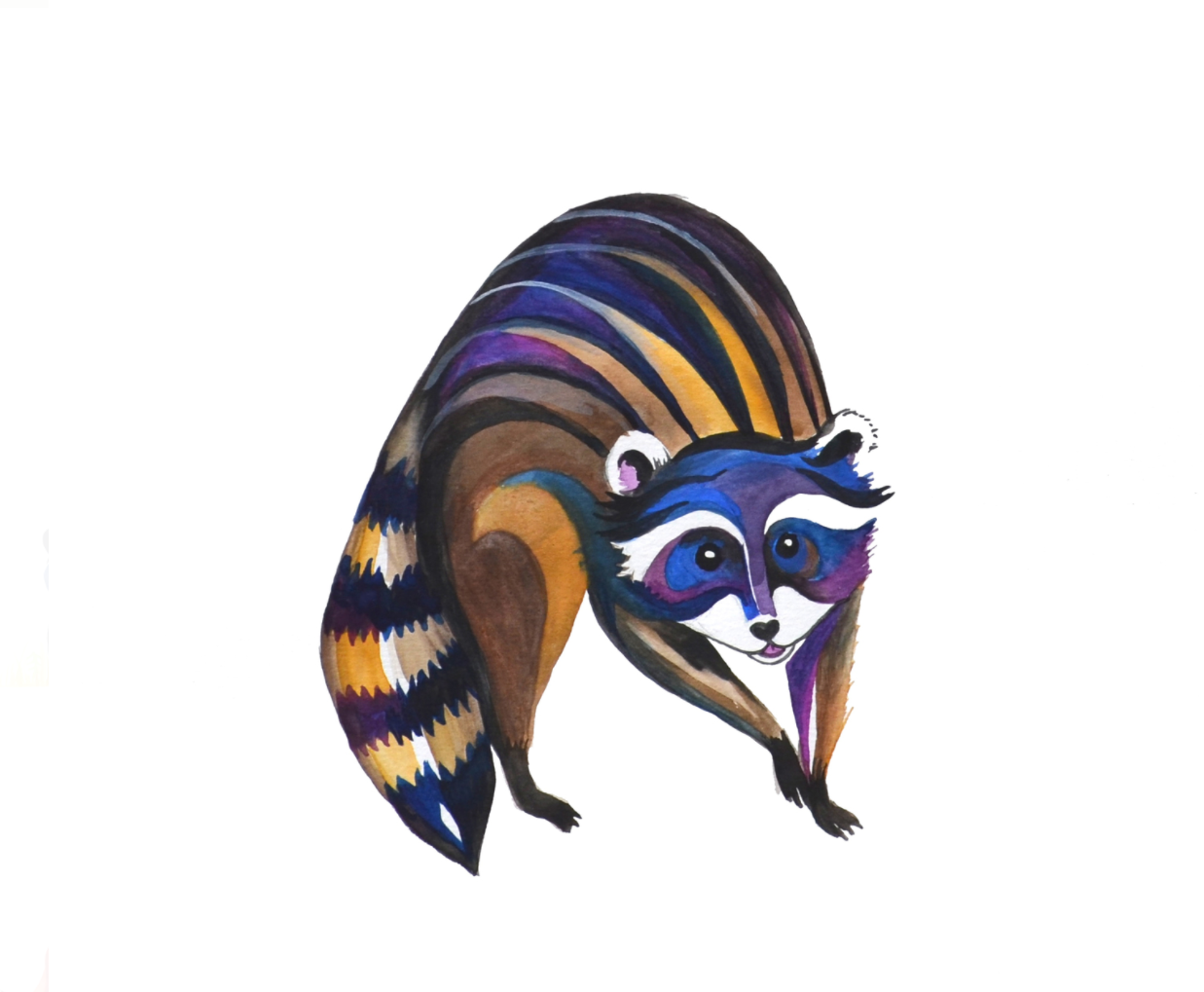 Racoon  watercolour on Fabriano CP paper  nine inches x nine inches  2014