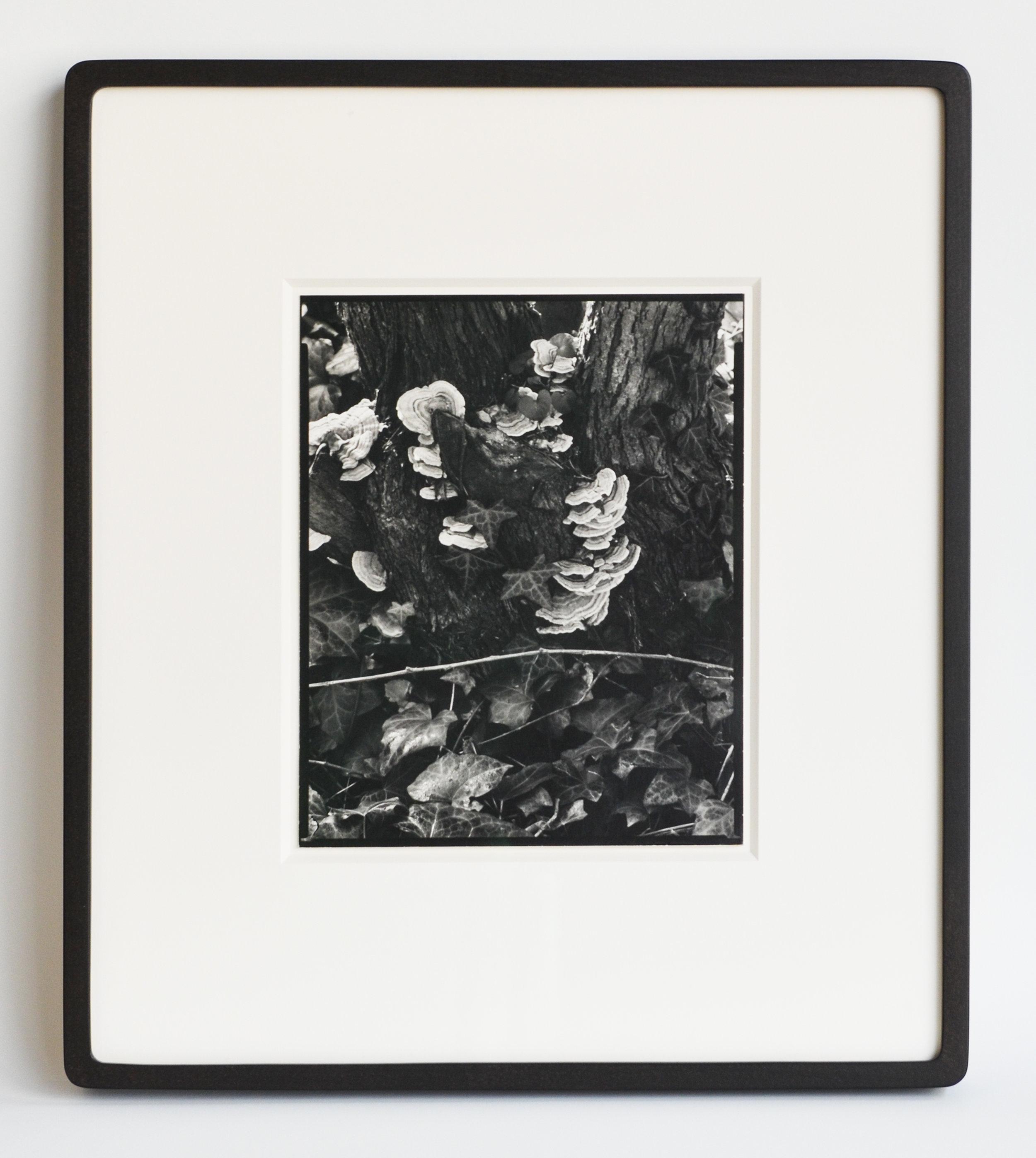 Paul Strand, The Garden.jpg