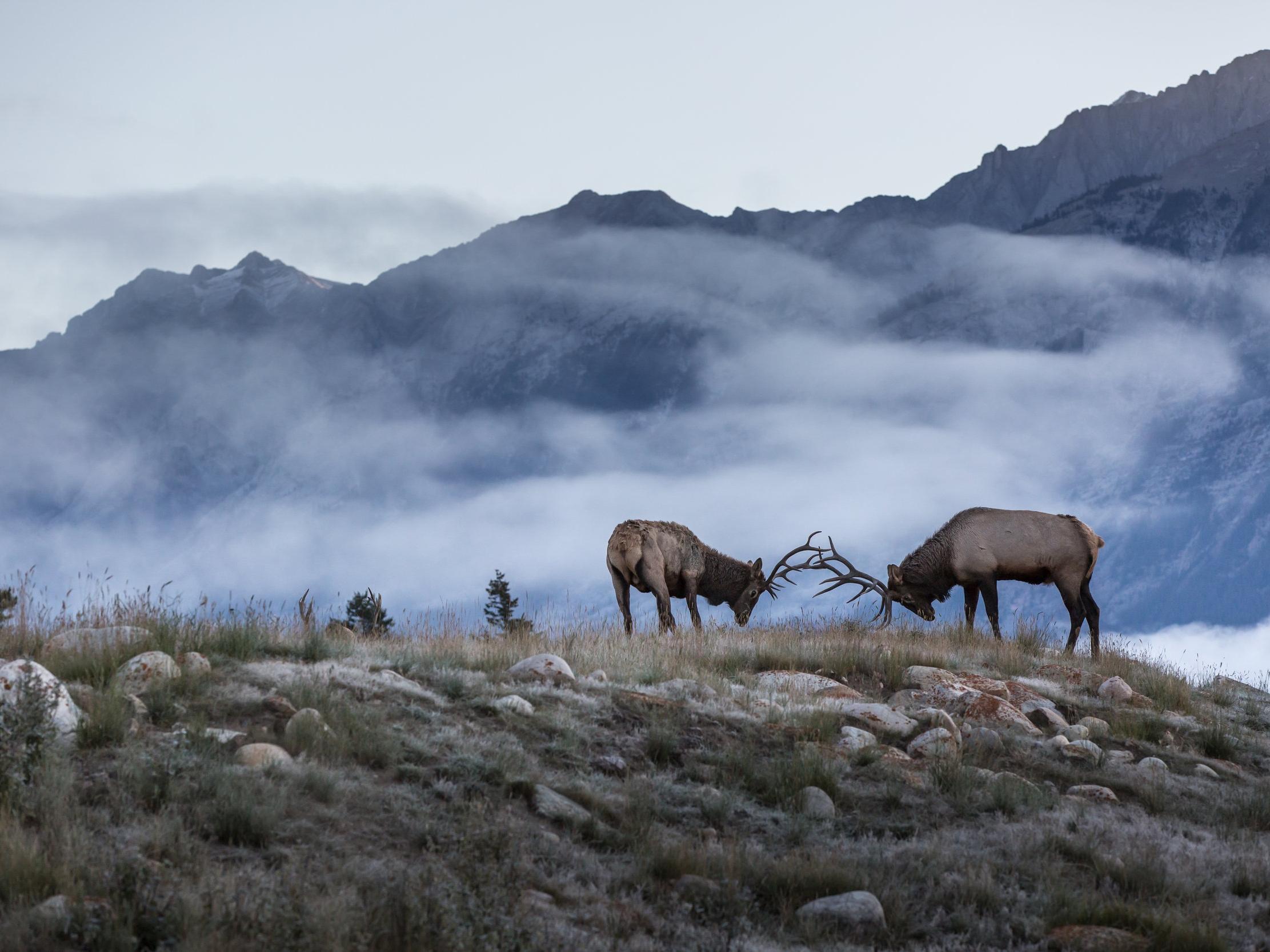 *Photo courtesy of Rocky Mountaineer