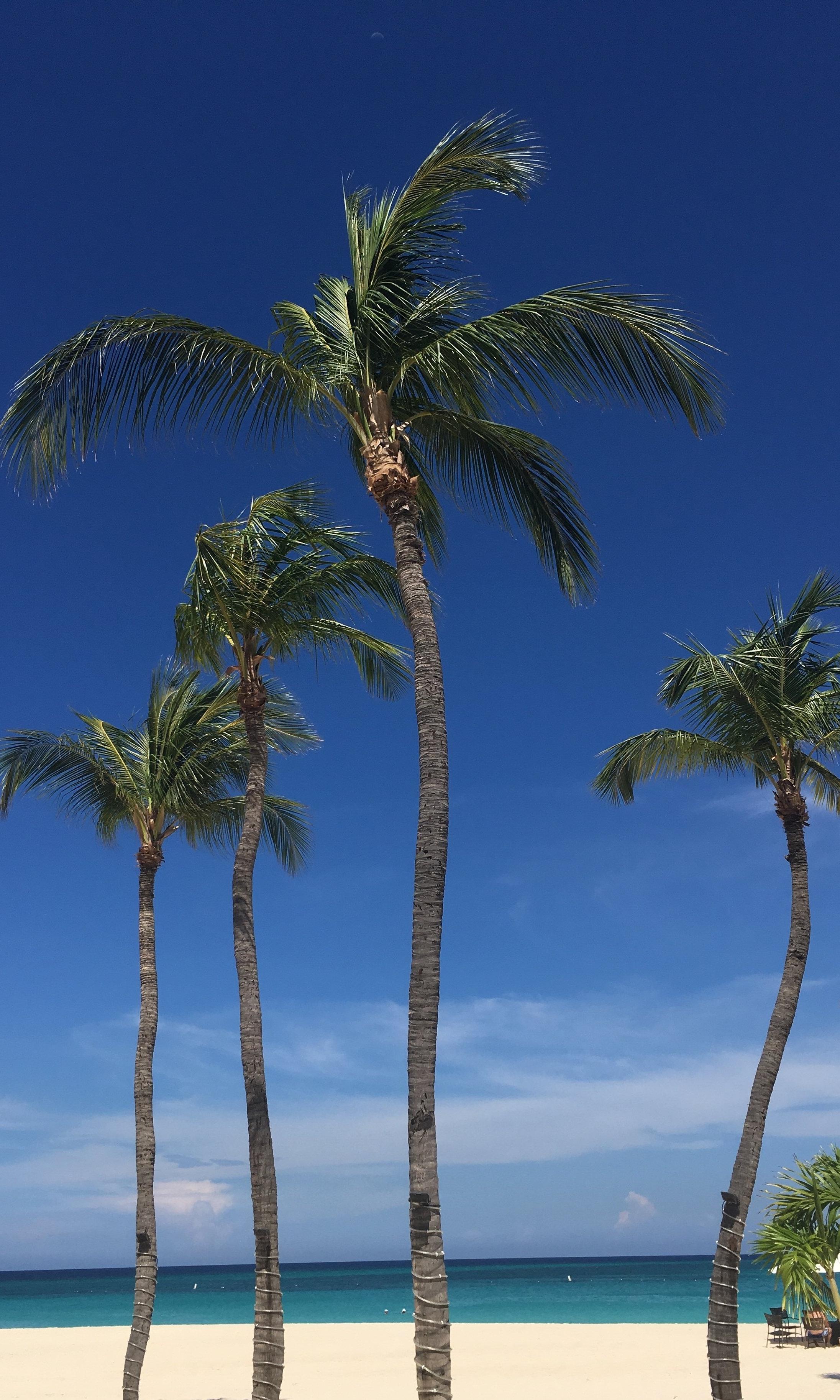 Wanderlust-blog-Aruba-resorts-beach-palm-tree
