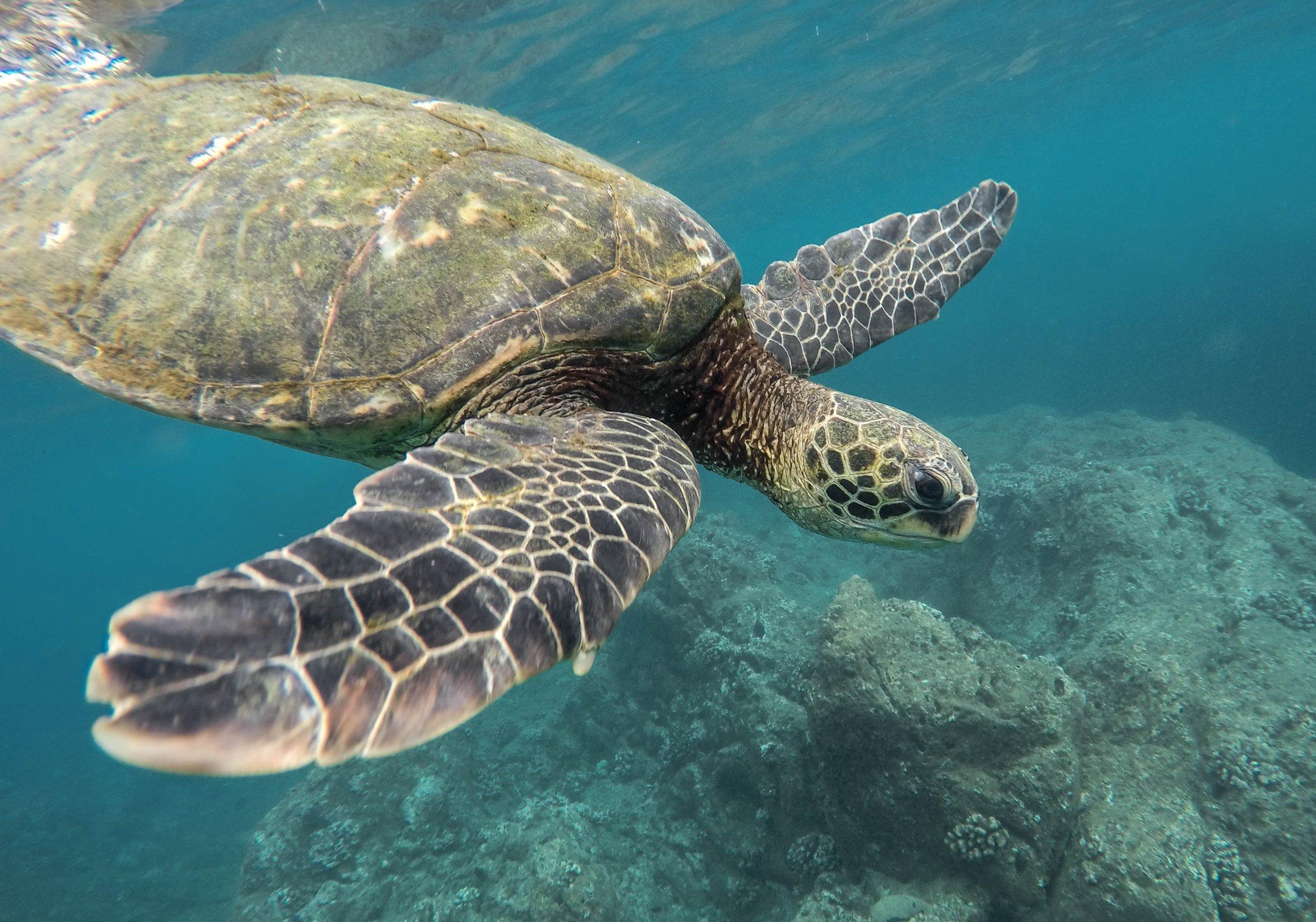 Wanderlust-Travel-blog-Galapagos-Islands-ocean-activities
