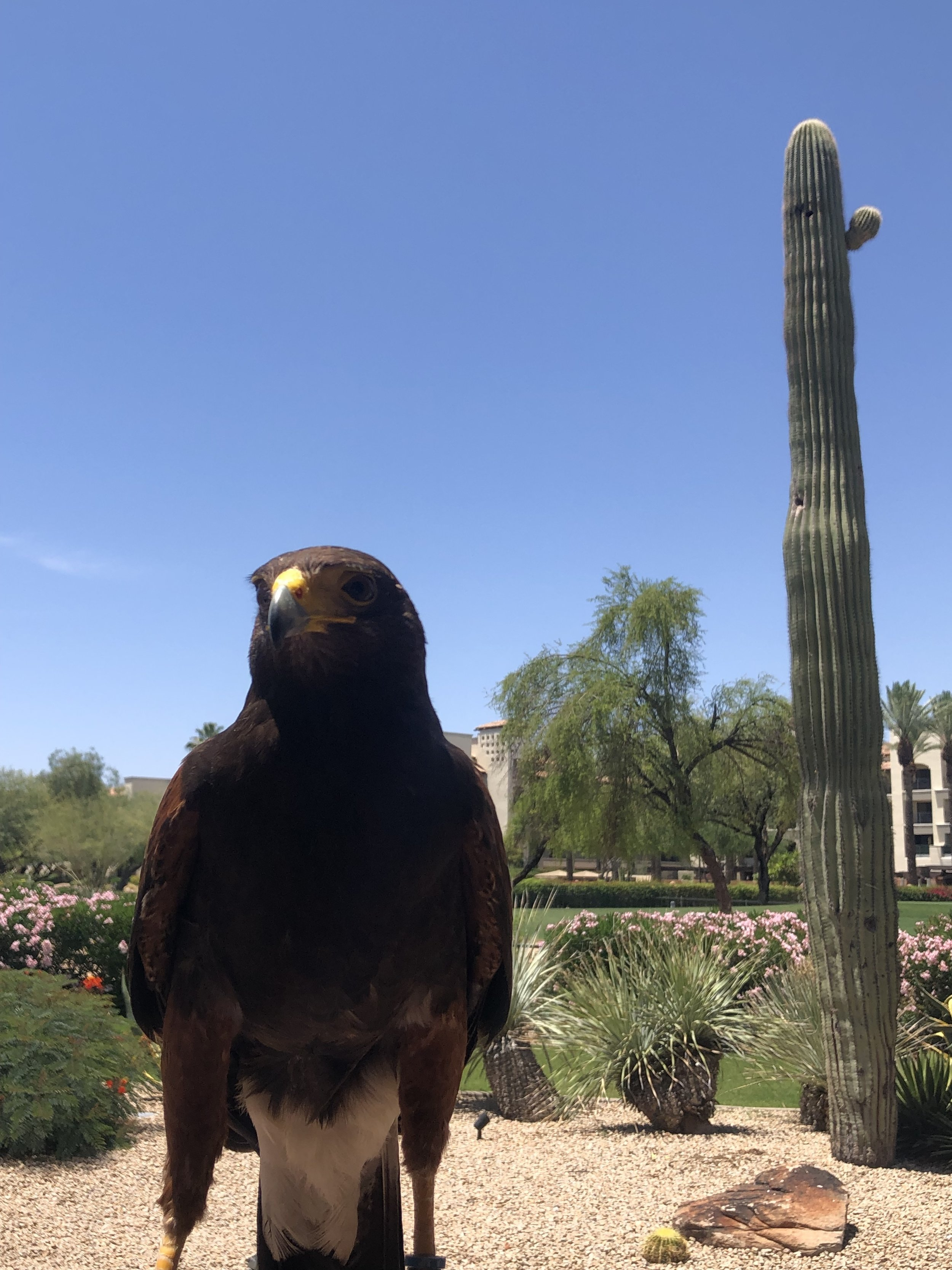 Wanderlust-travel-blog-Scottsdale-Arizona-desert