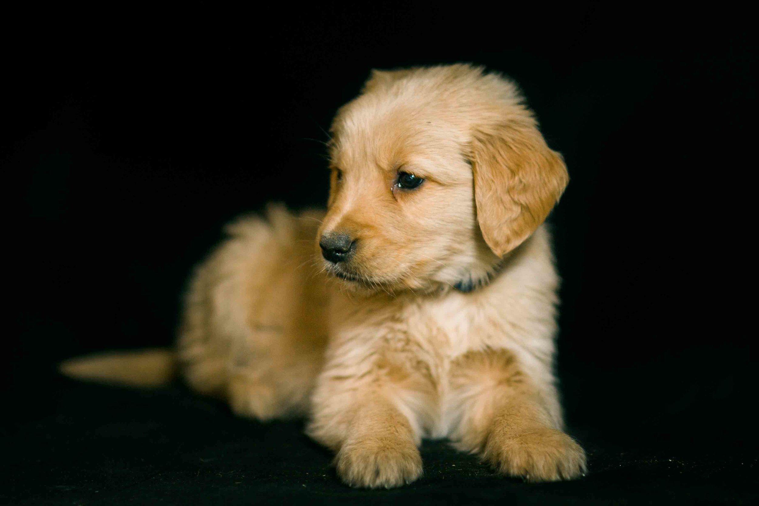 Puppies-42.jpg