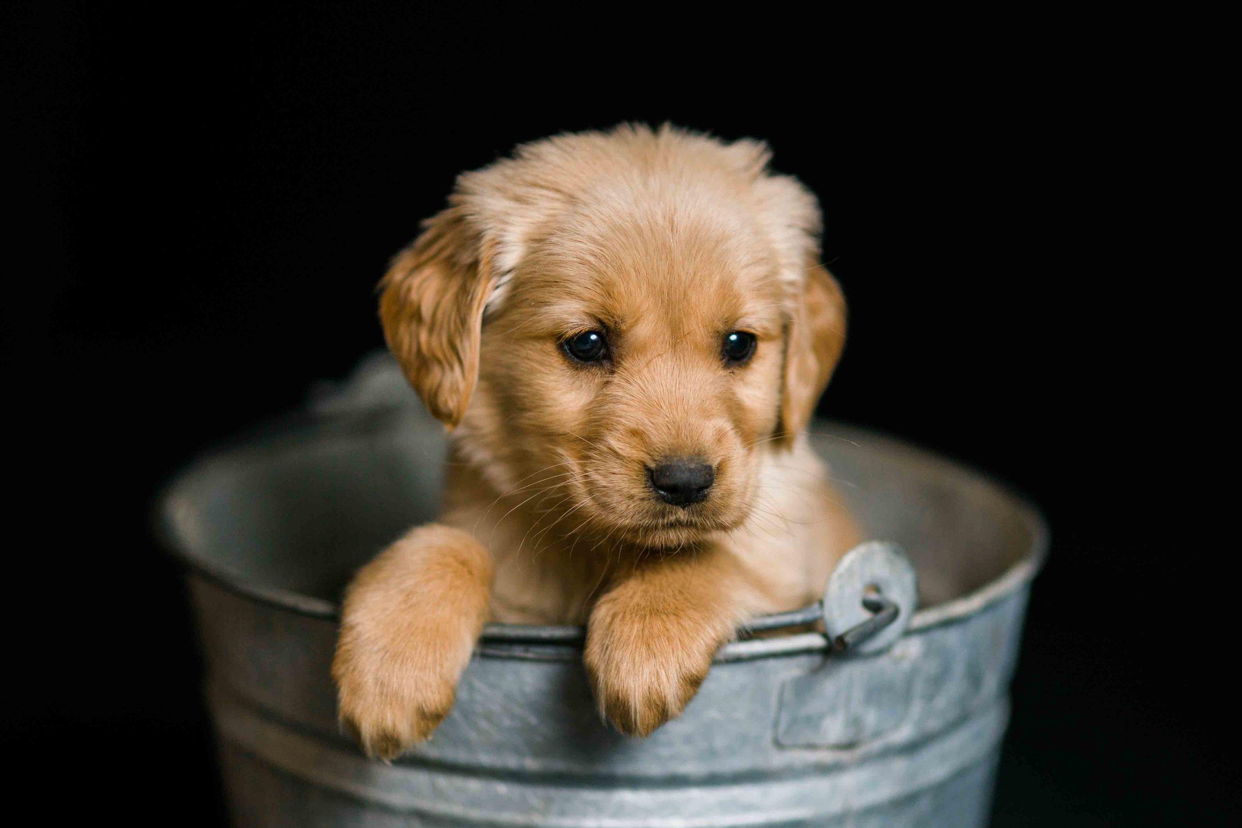 Puppies-36.jpg