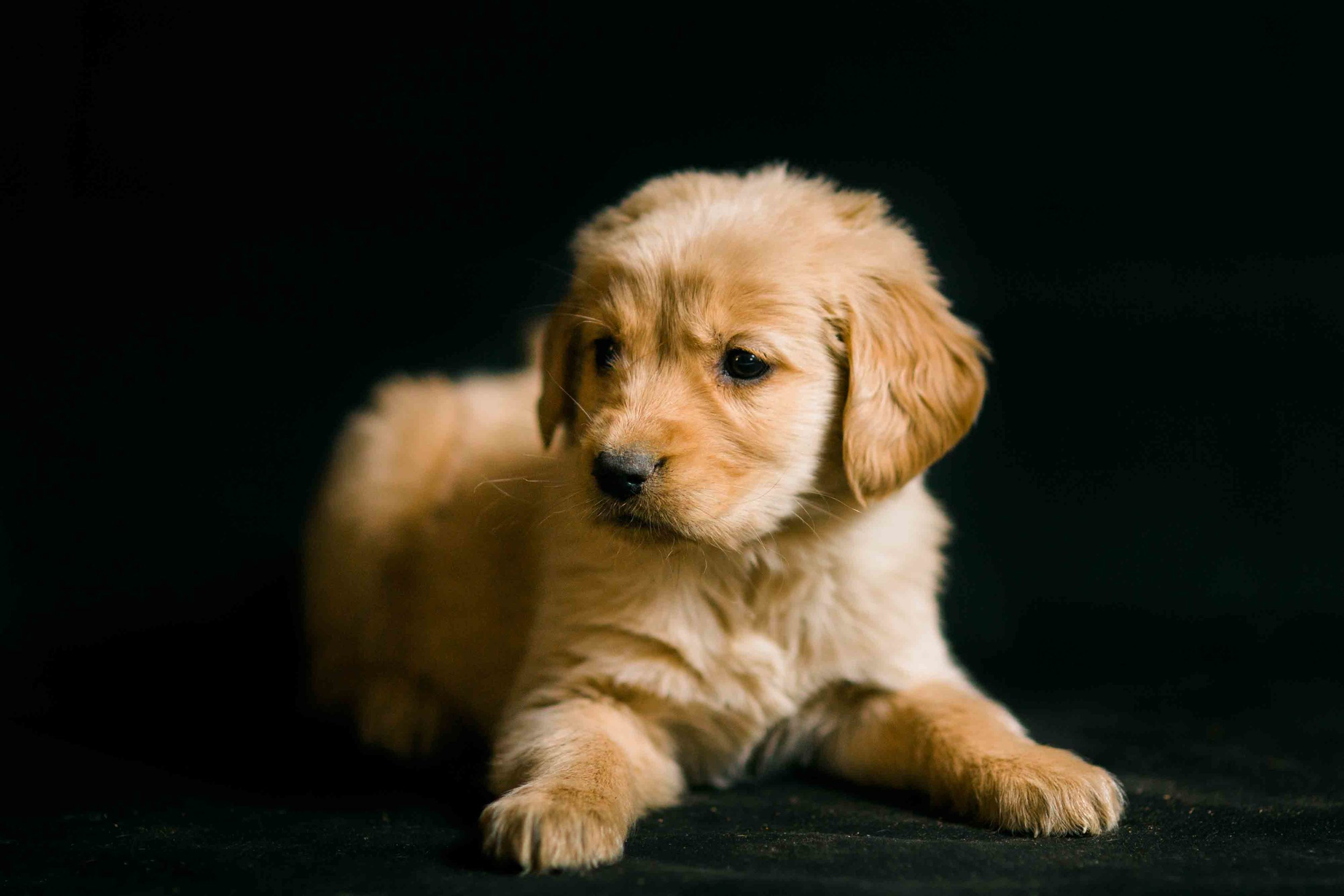 Puppies-34.jpg