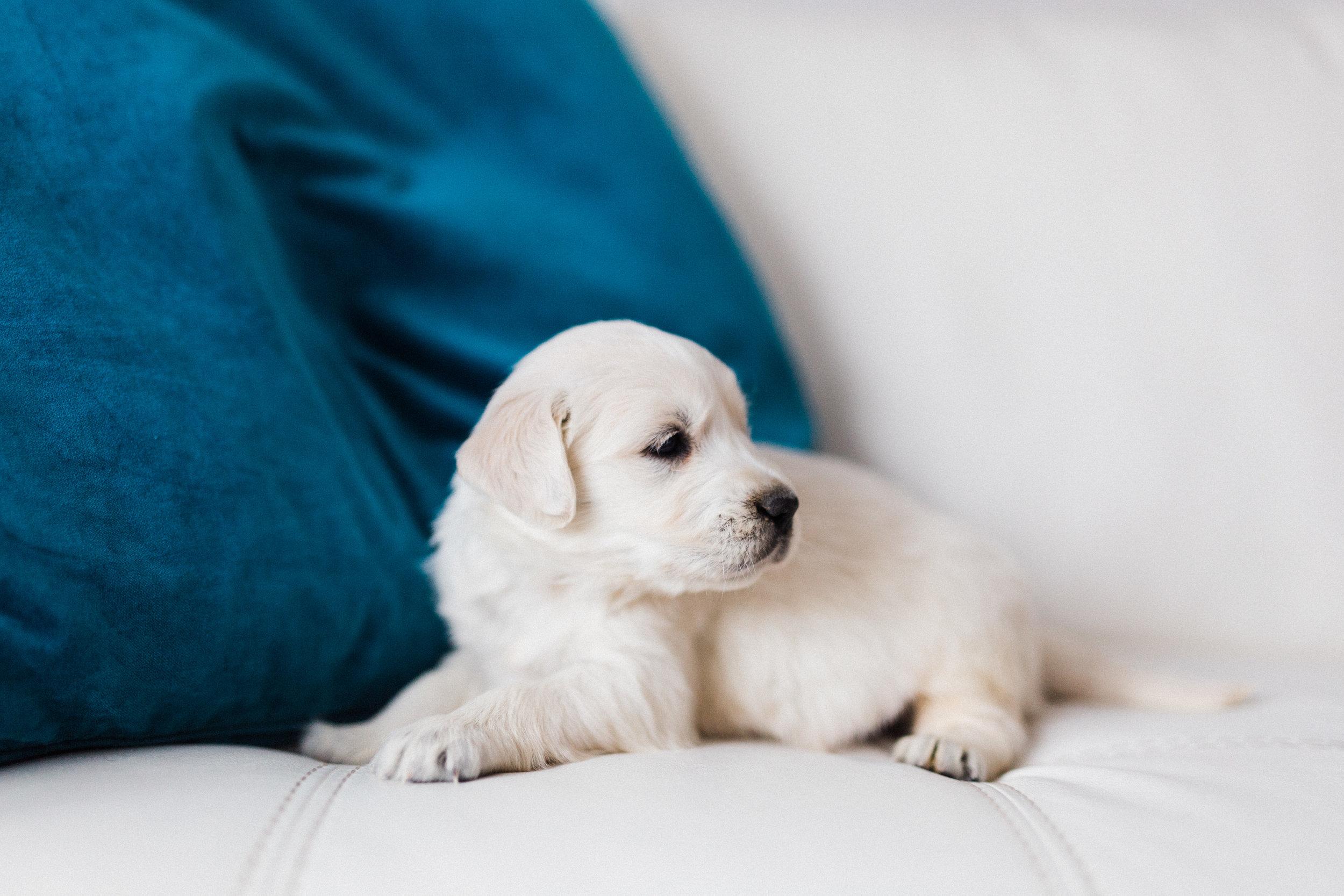 Cooper Bingley's First Puppies-1.jpg
