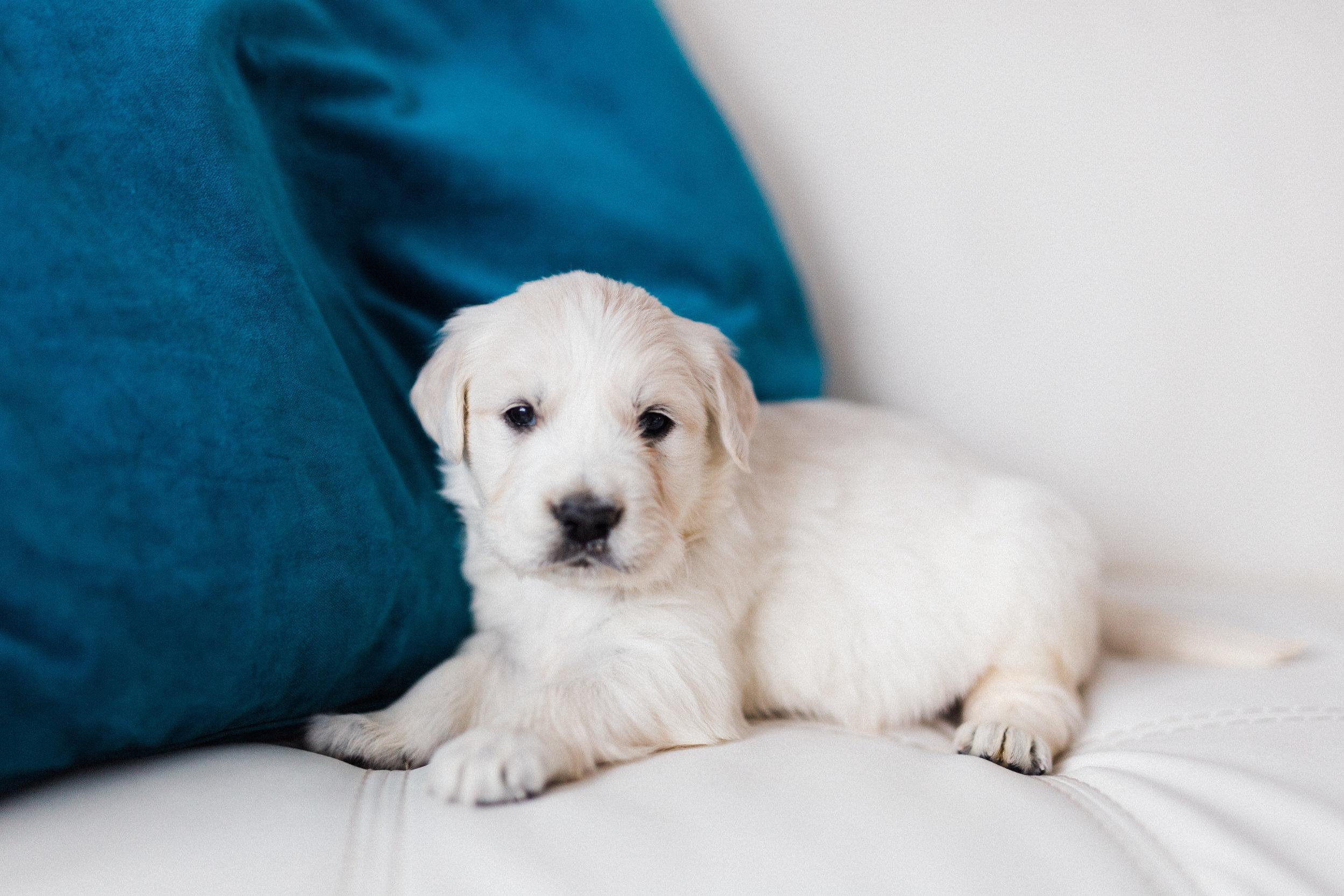 Cooper Bingley's First Puppies-3.jpg