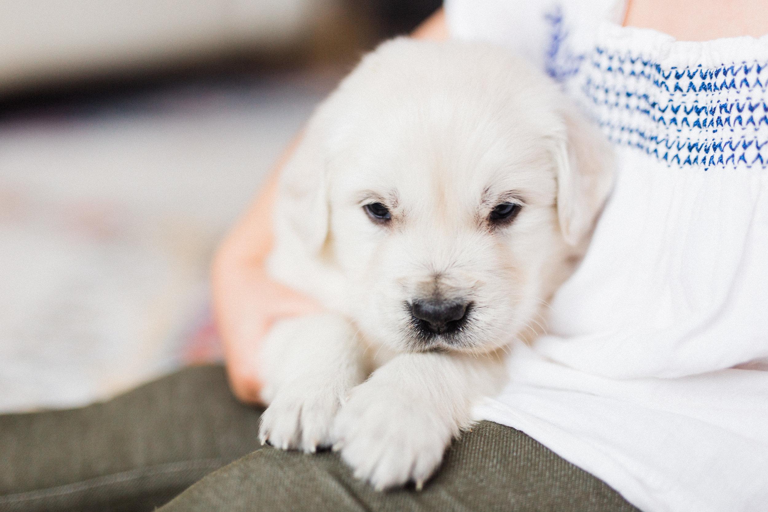 Jake Bingley's First Puppies-8.jpg