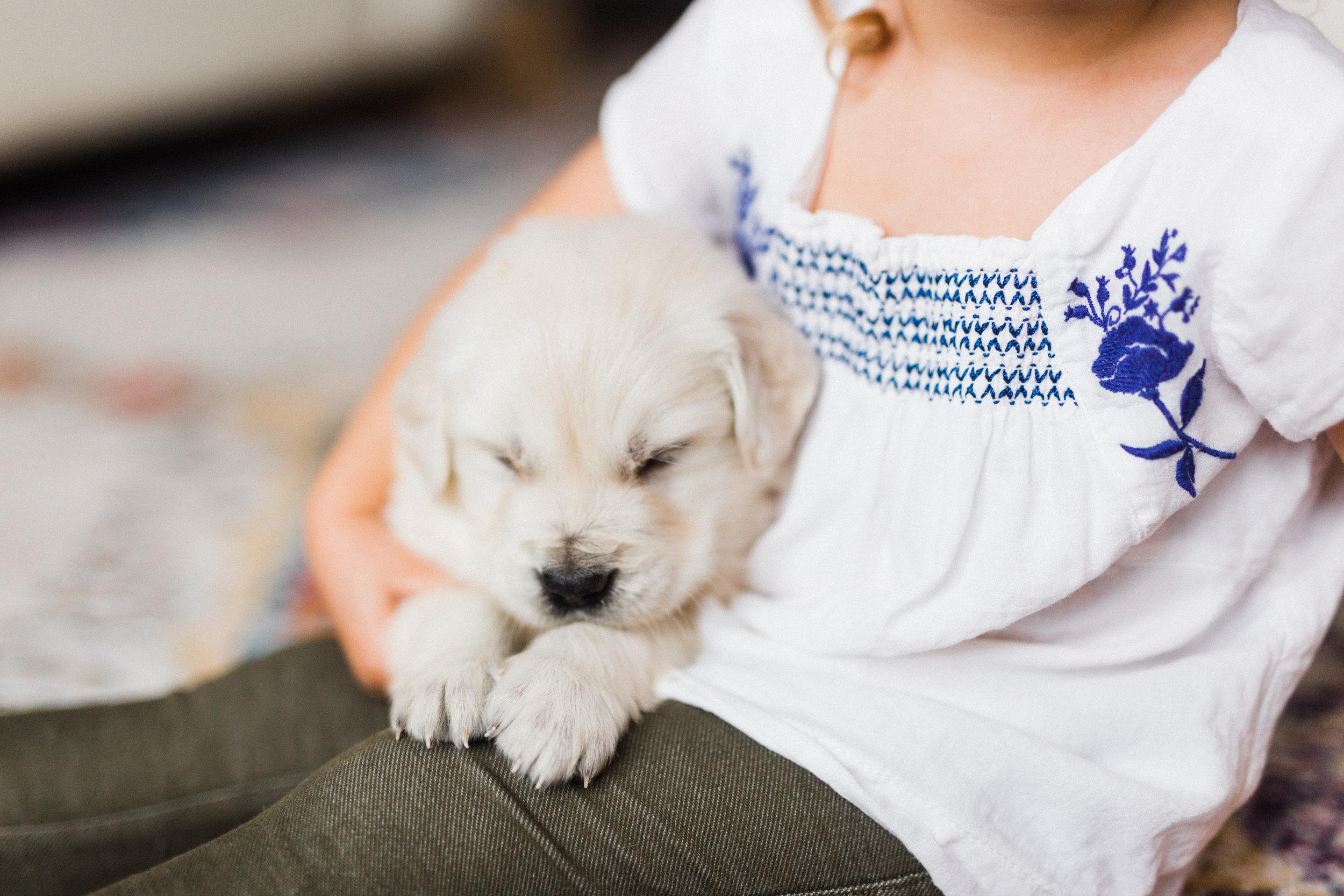 Jake Bingley's First Puppies-6.jpg