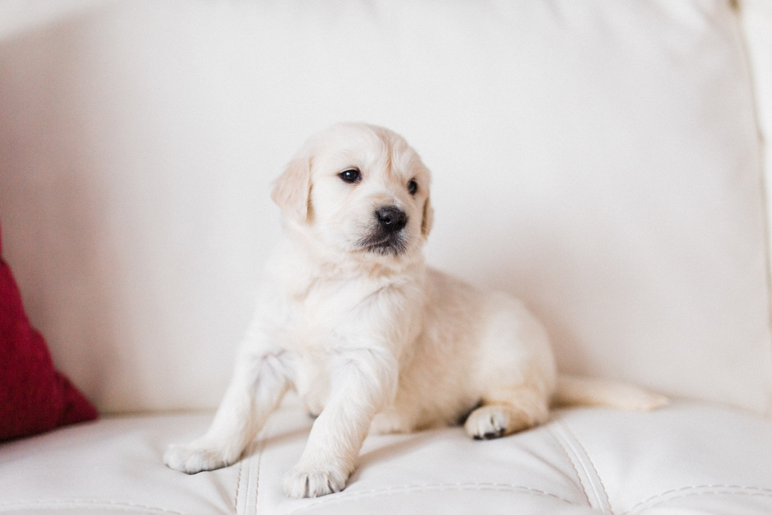 Willow Bingley's First Puppies-11.jpg