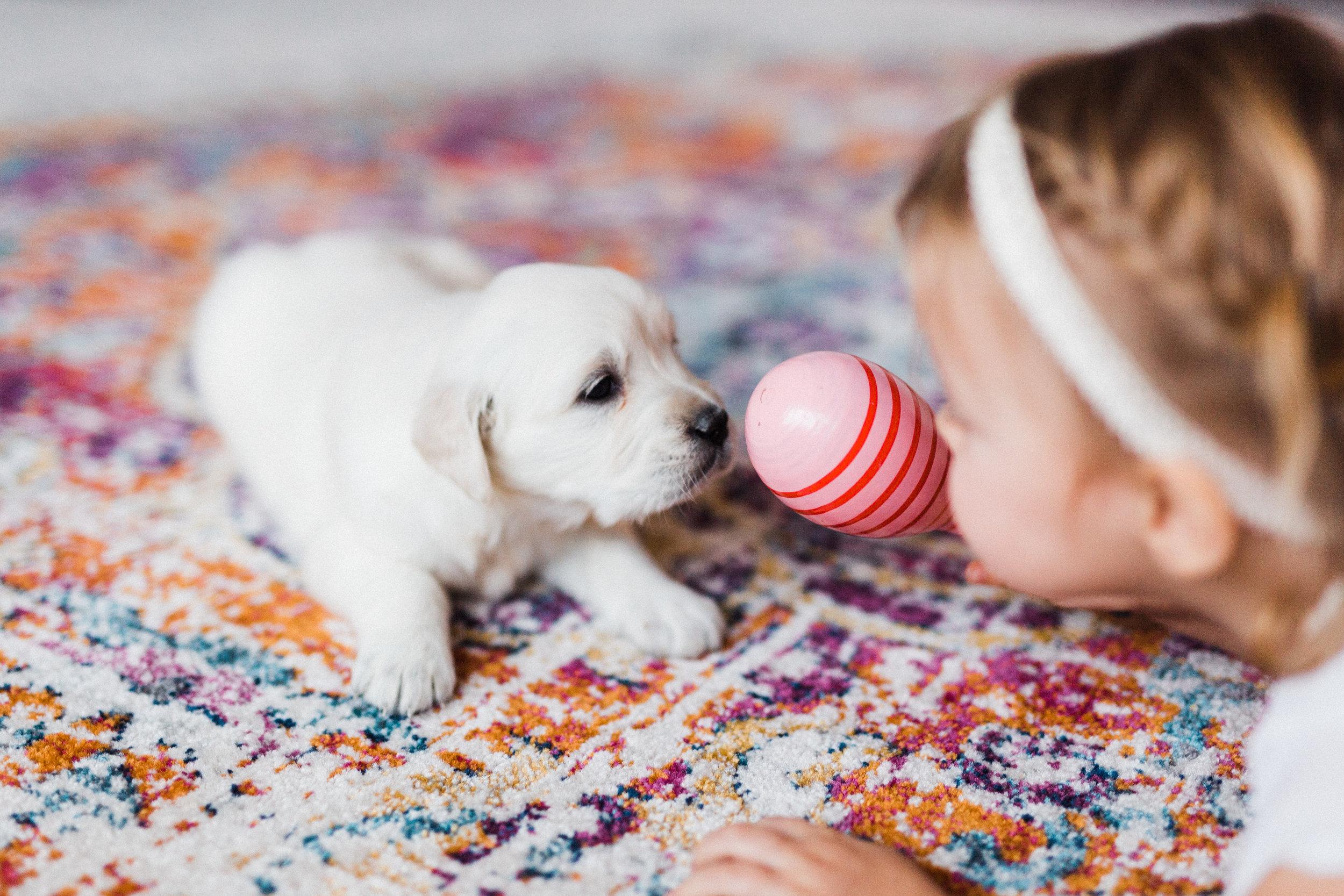 Charlotte Bingley's First Puppies-5.jpg