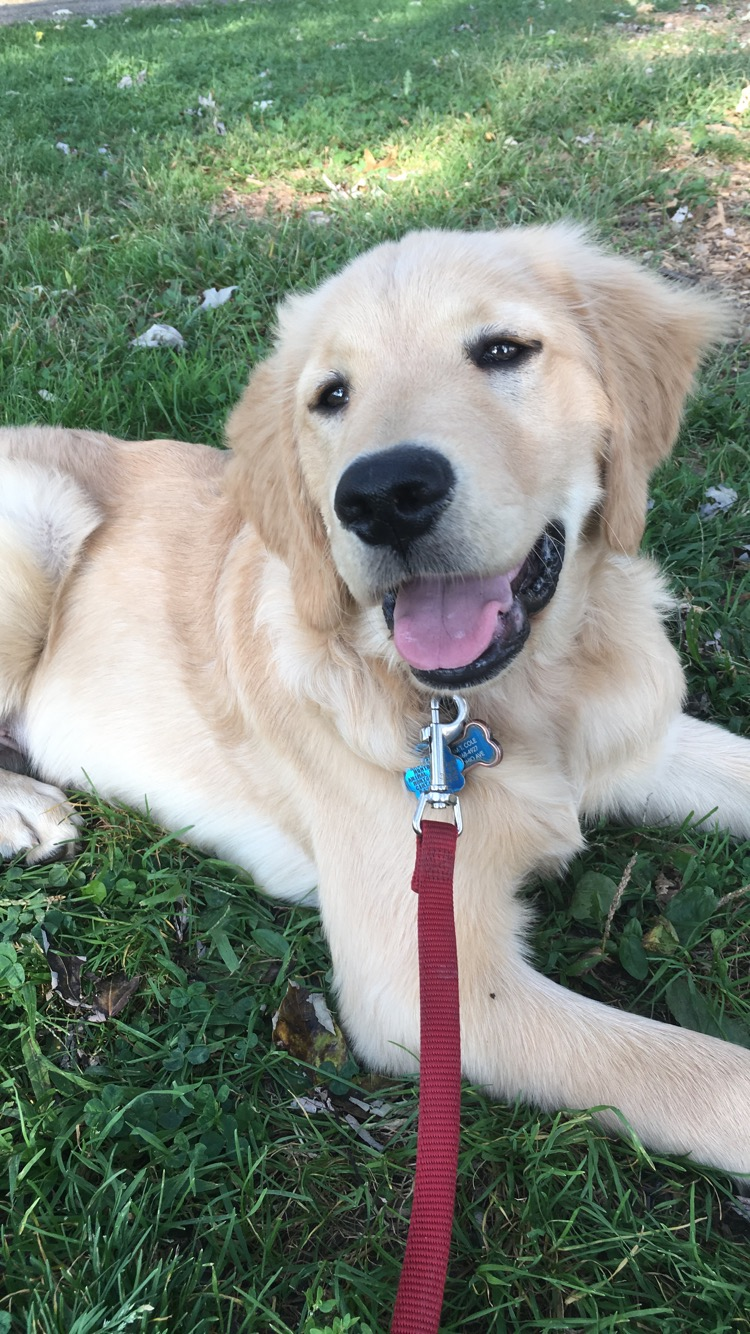 """""""Jason and his wife were really easy to work with throughout the whole process of adopting my puppy, Oakley. Oakley is 20 weeks old and loves playing with other dogs. He greets everybody by rolling over onto his back and welcoming a belly rub. Oakley is very well mannered and has been such a joy in my life."""" - Adam"""