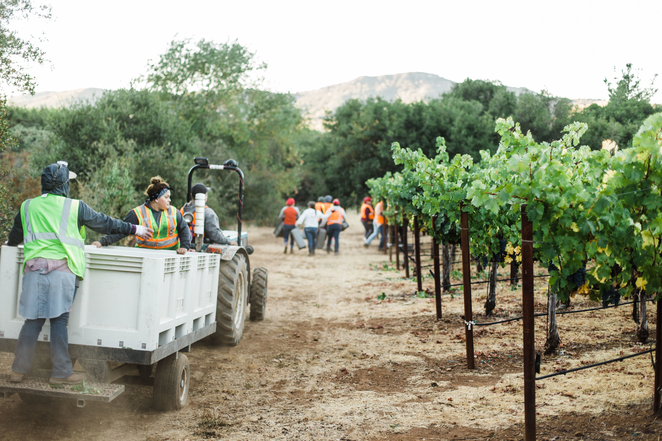 Silver Oak's Stagecoach Harvest - Sarah Anne Risk-9.JPG