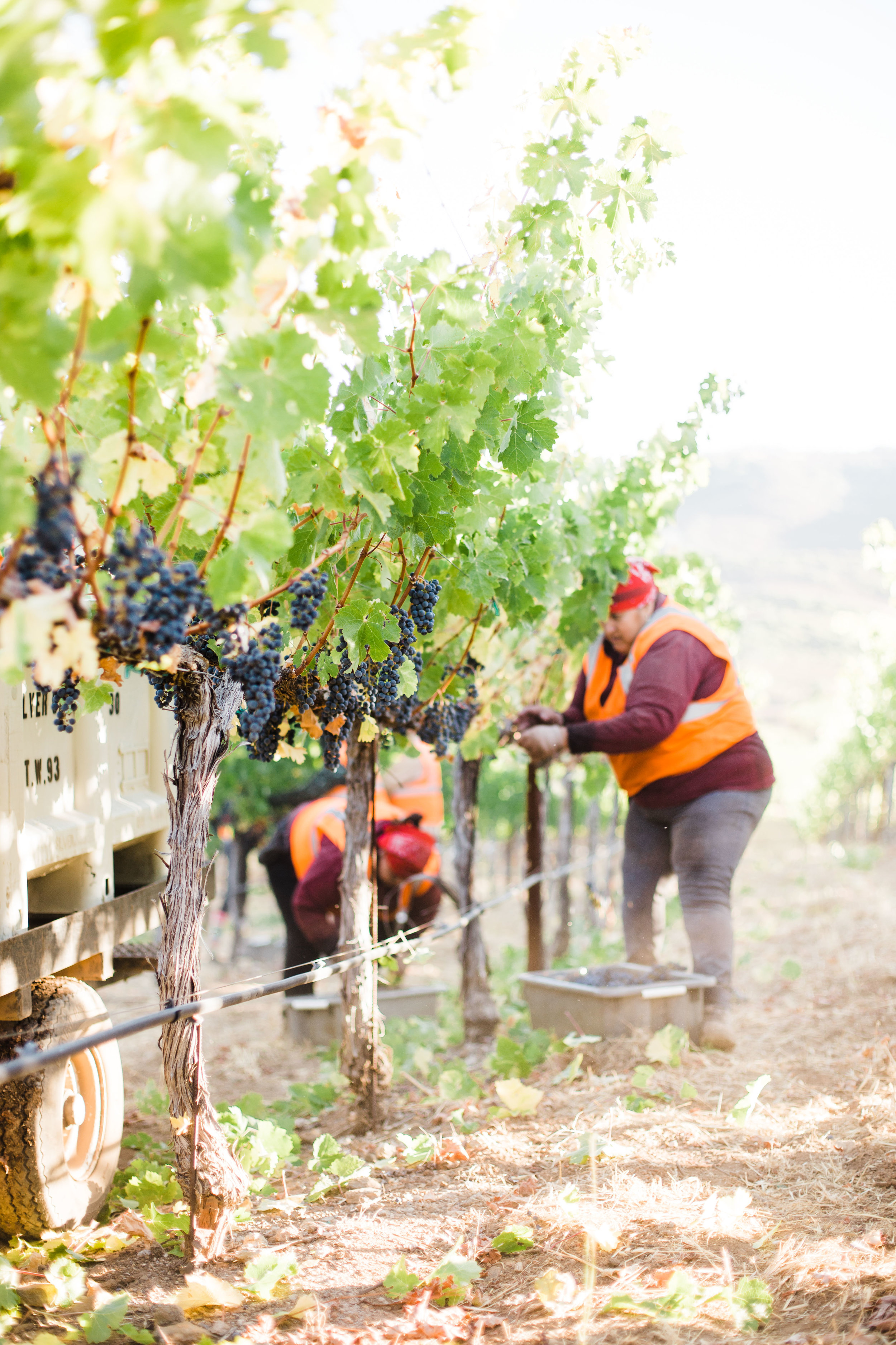 Silver Oak's Stagecoach Harvest - Sarah Anne Risk-66.JPG
