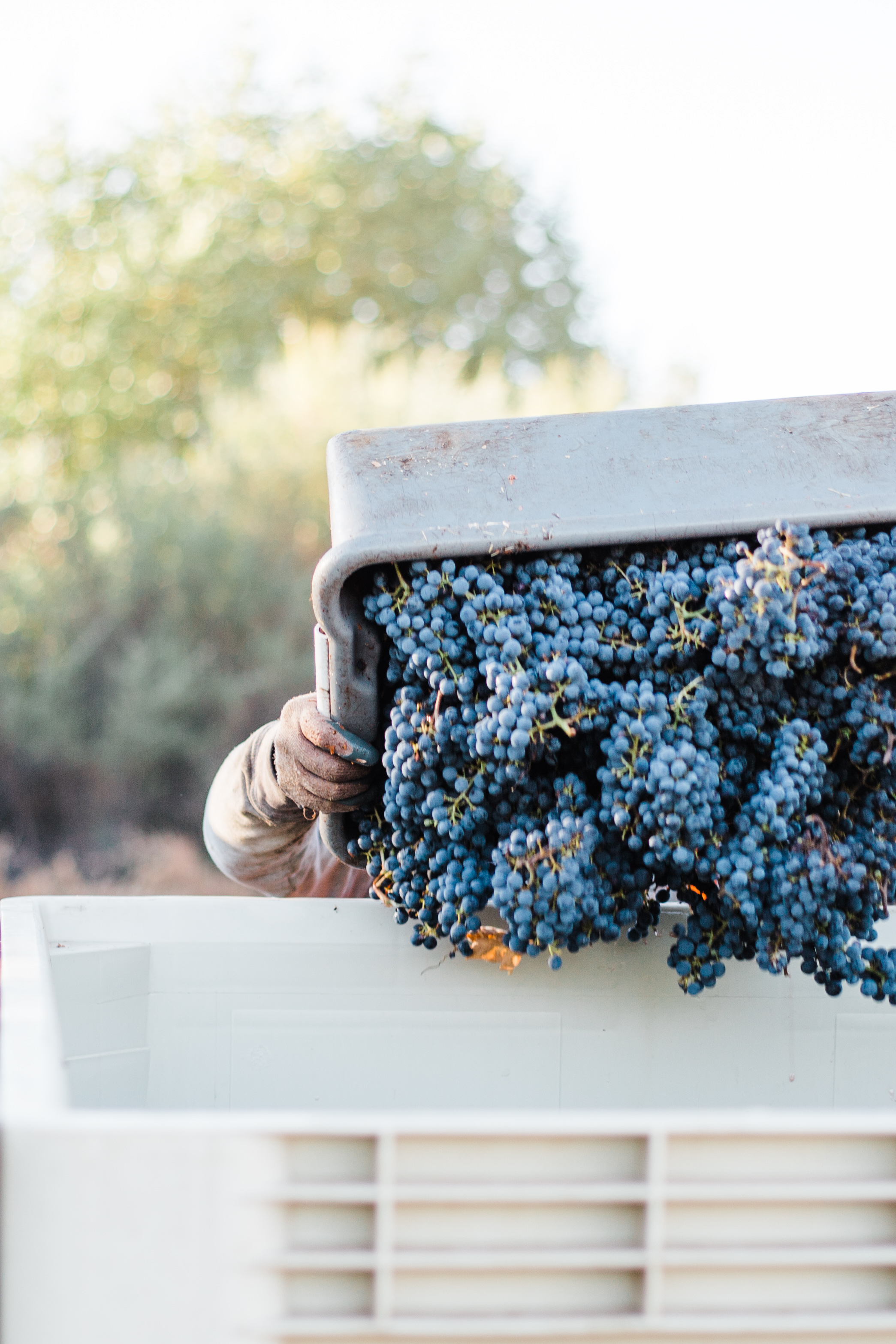 Silver Oak's Stagecoach Harvest - Sarah Anne Risk-75.JPG