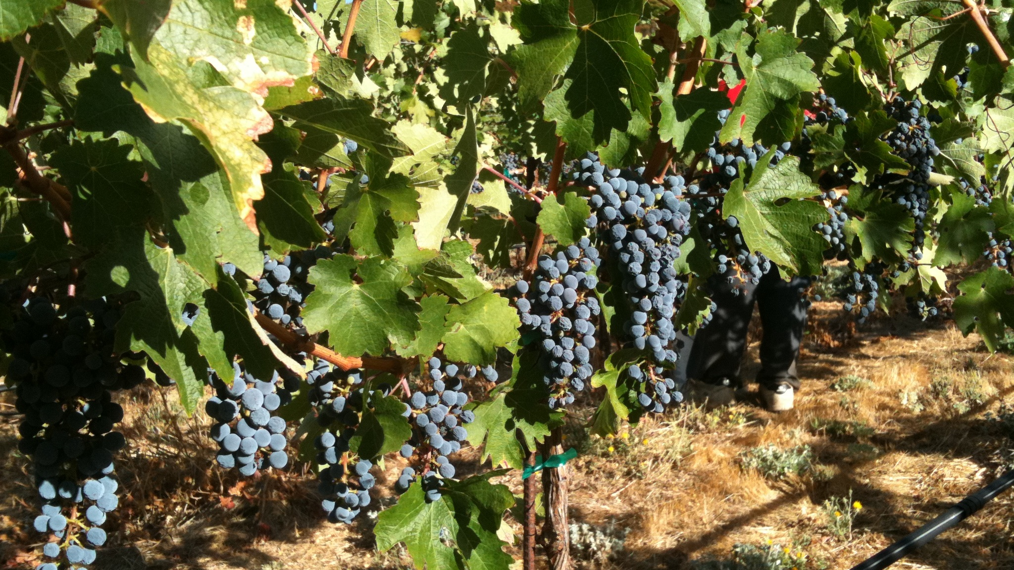 Wines made from select vineyards in Napa, Sonoma and throughout the North Coast of California
