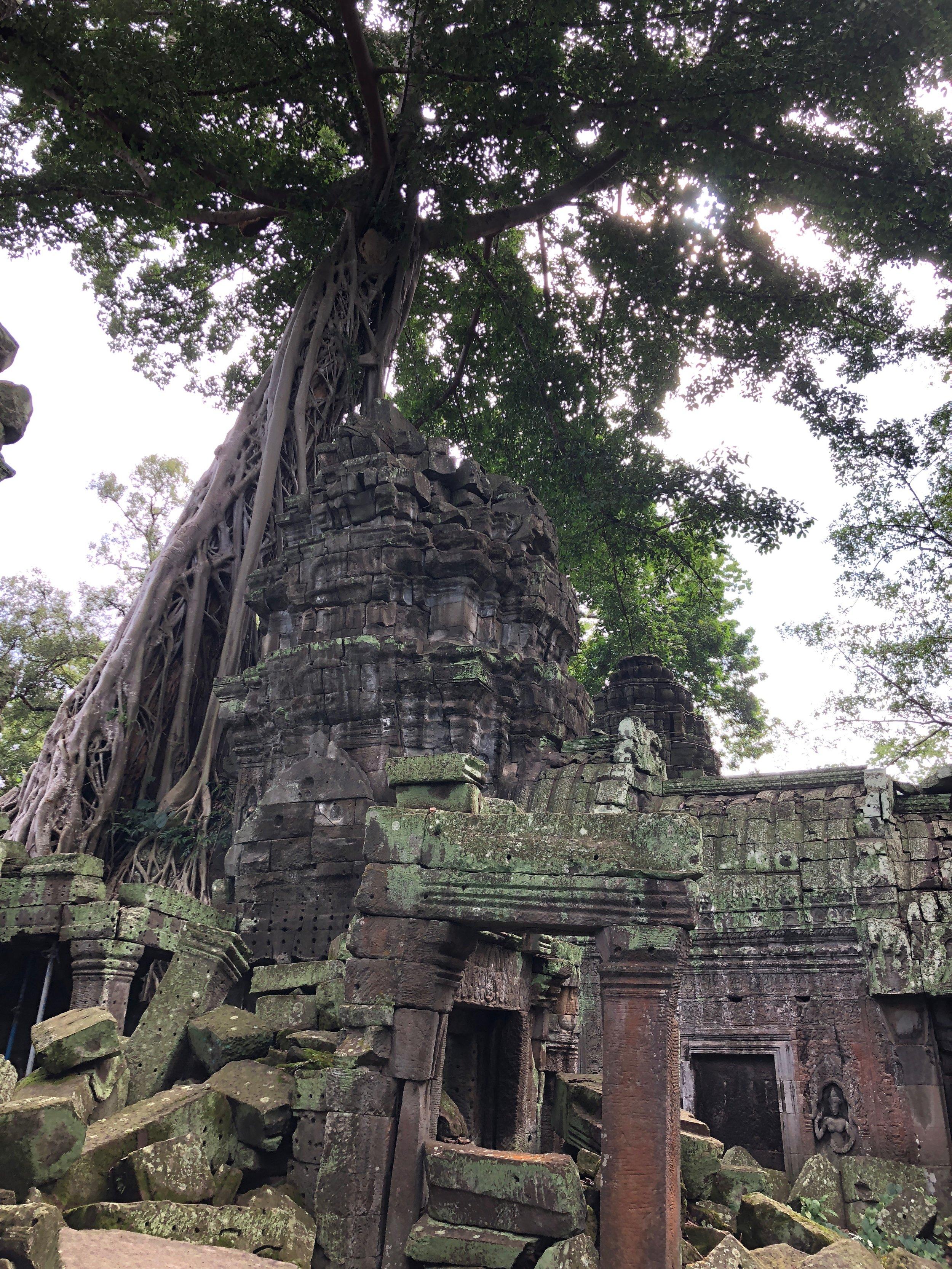 ta_prohm_temple_tree.jpg