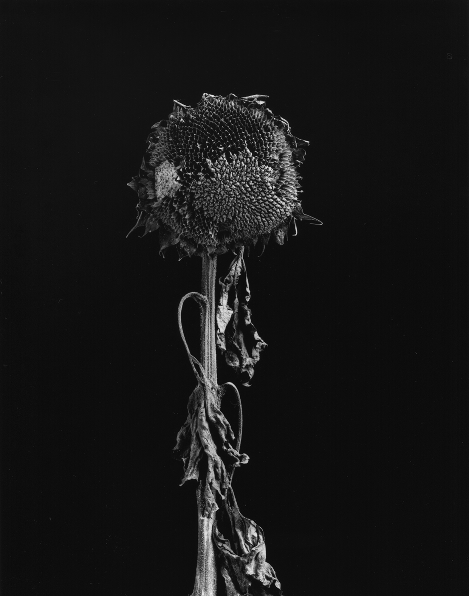 MEDALLION AWARD WINNER    TIM SCHROLL  - Blandinsville, IL  End of Season  silver gelatin print