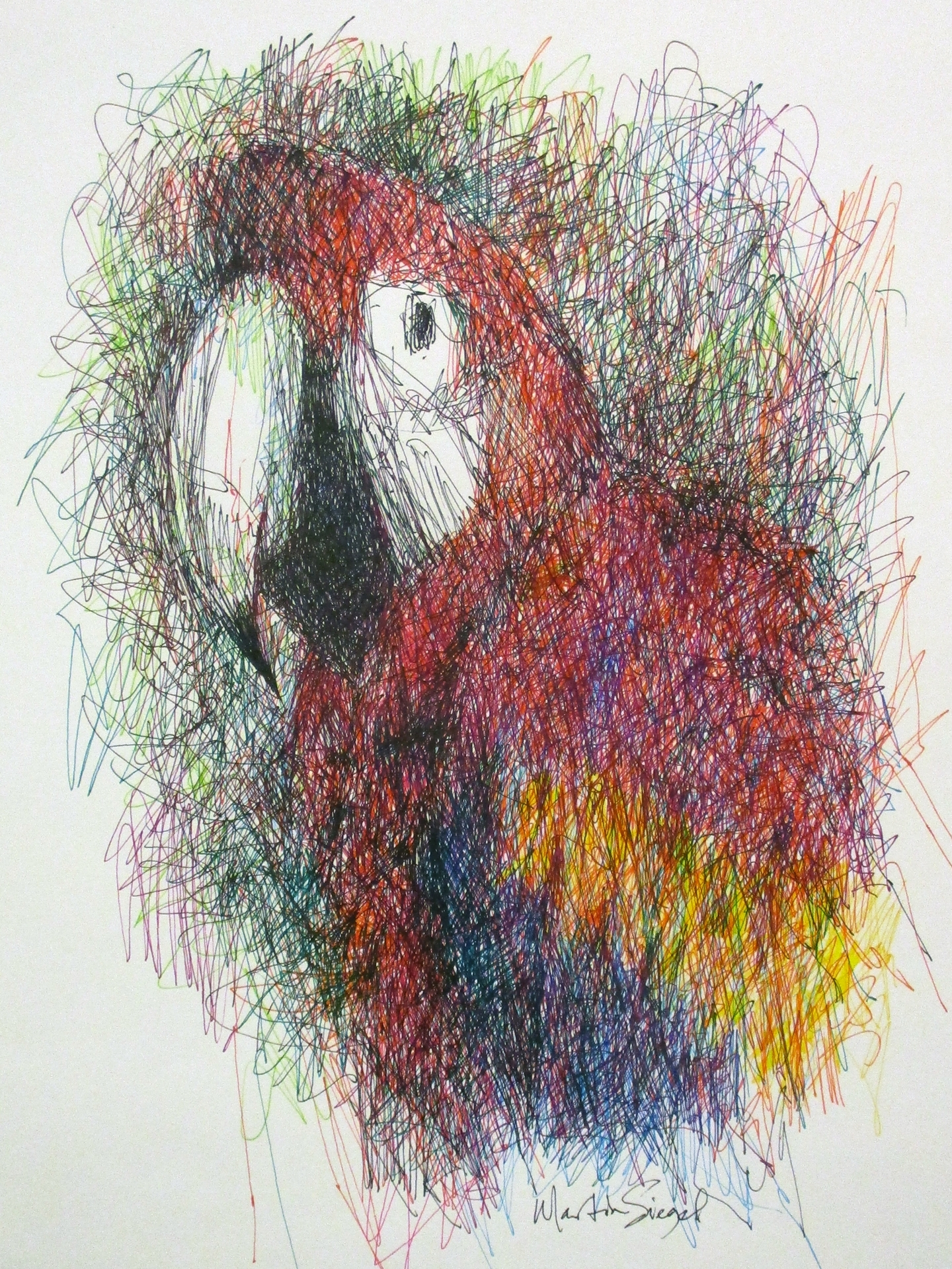 MARTIN SIEGEL  - Silver Lake, OH   Red Macaw   drawing - gel pen, $800