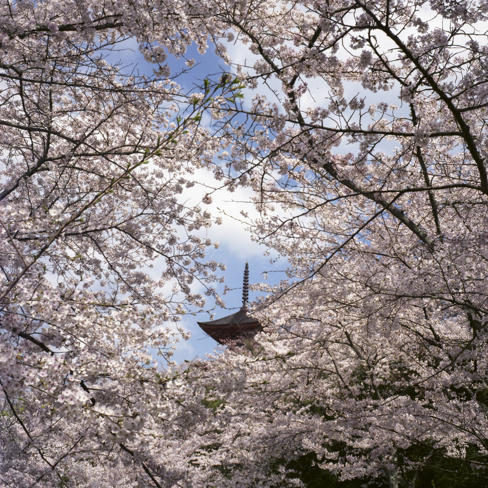 JAPAN_2019_PARIS_BRUMMER-11.JPG