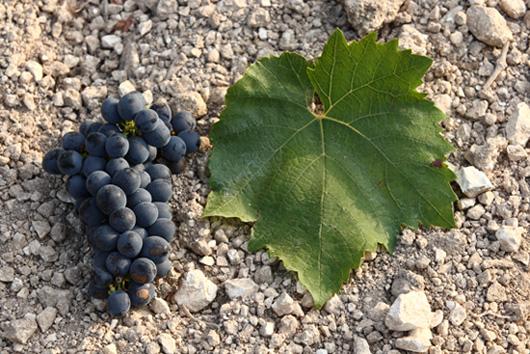 Nero-grape.jpg